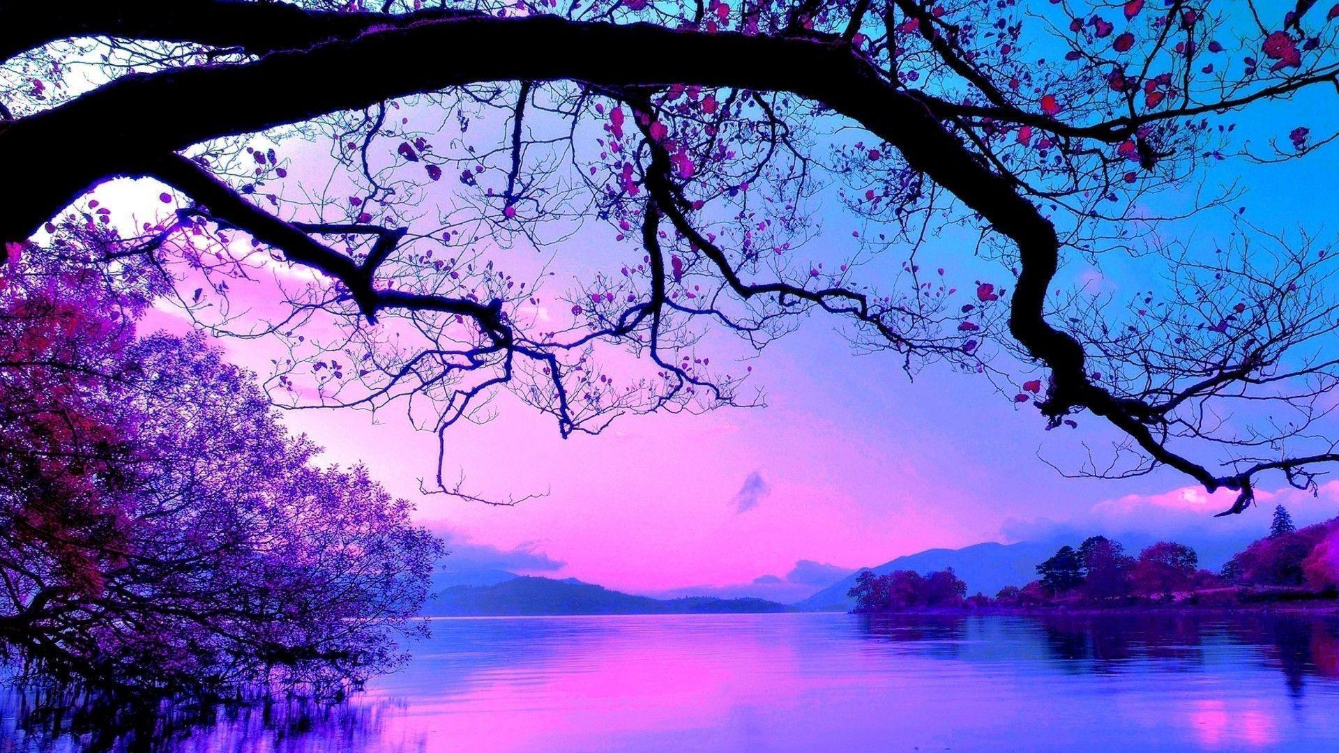 purple tree wallpapers trees
