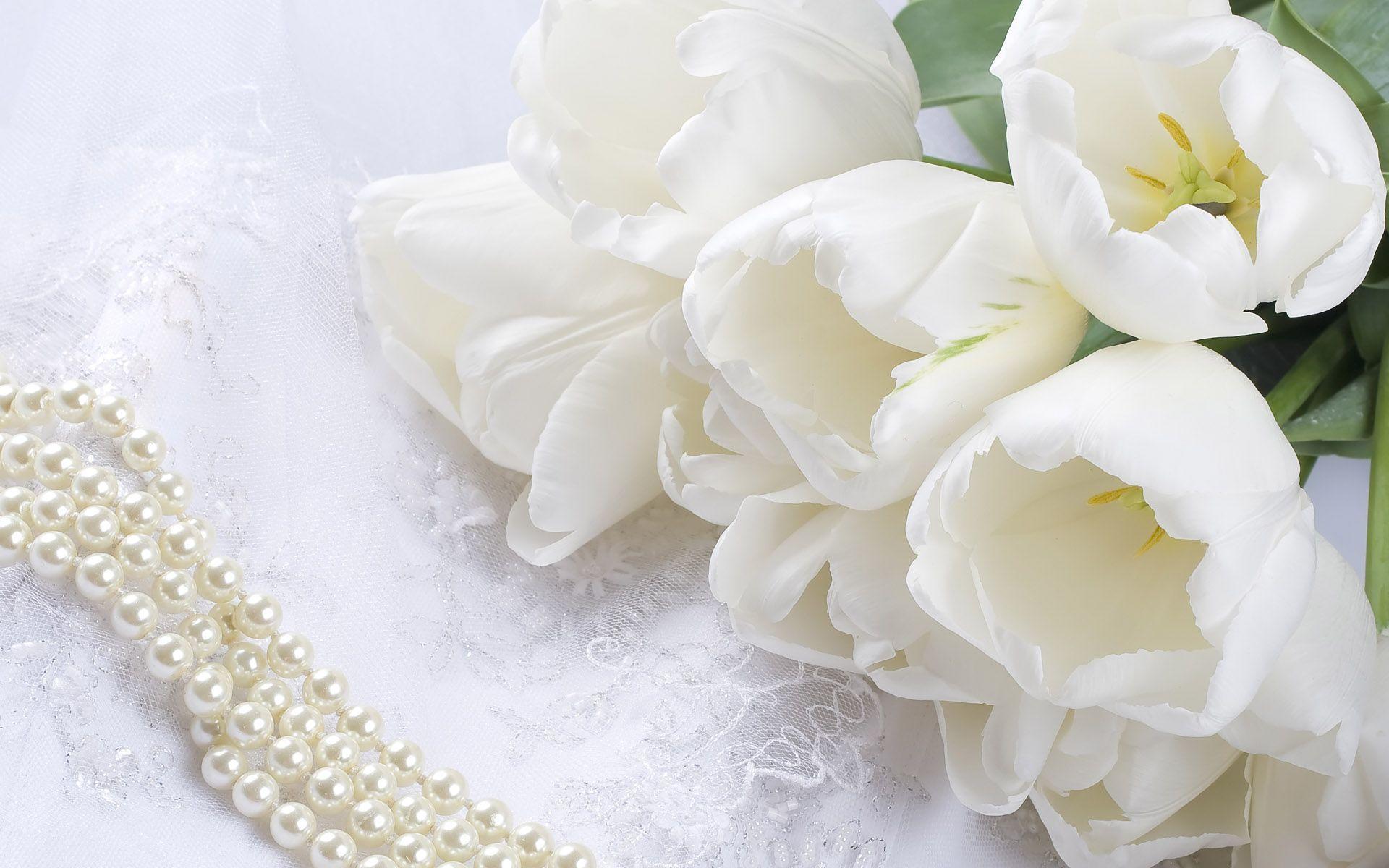 Wallpapers For White Flower Desktop