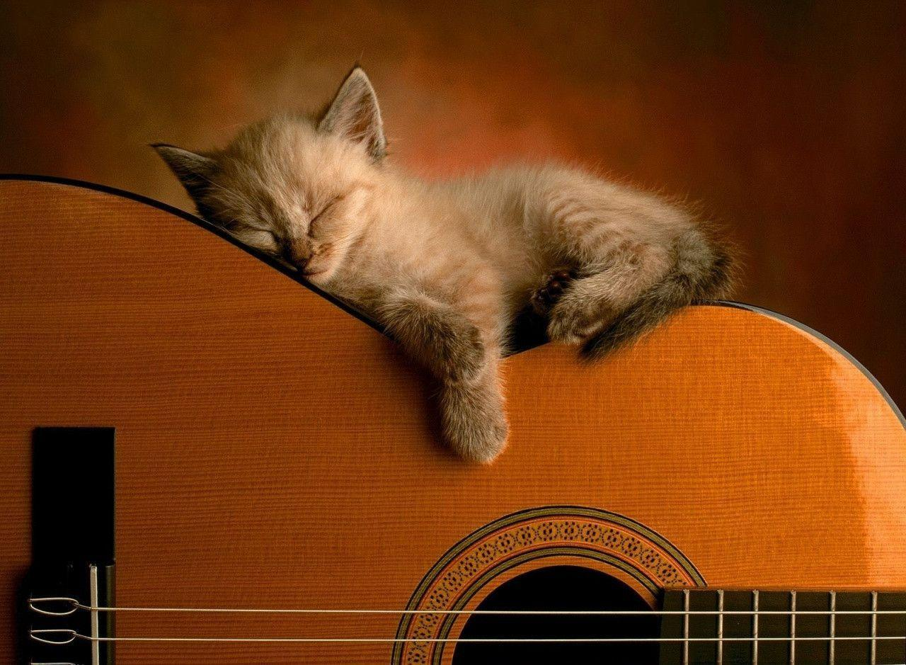 User account requiredCute Cats Wallpapers
