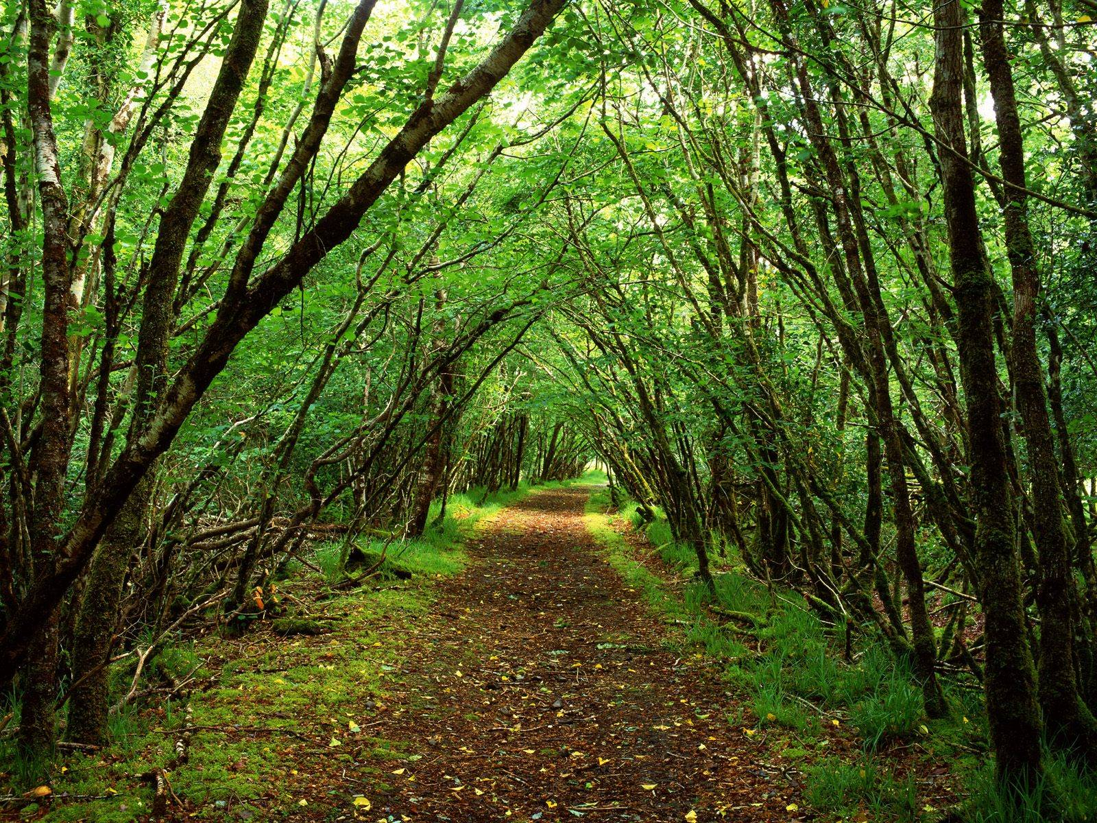 Green Forest Backgrounds