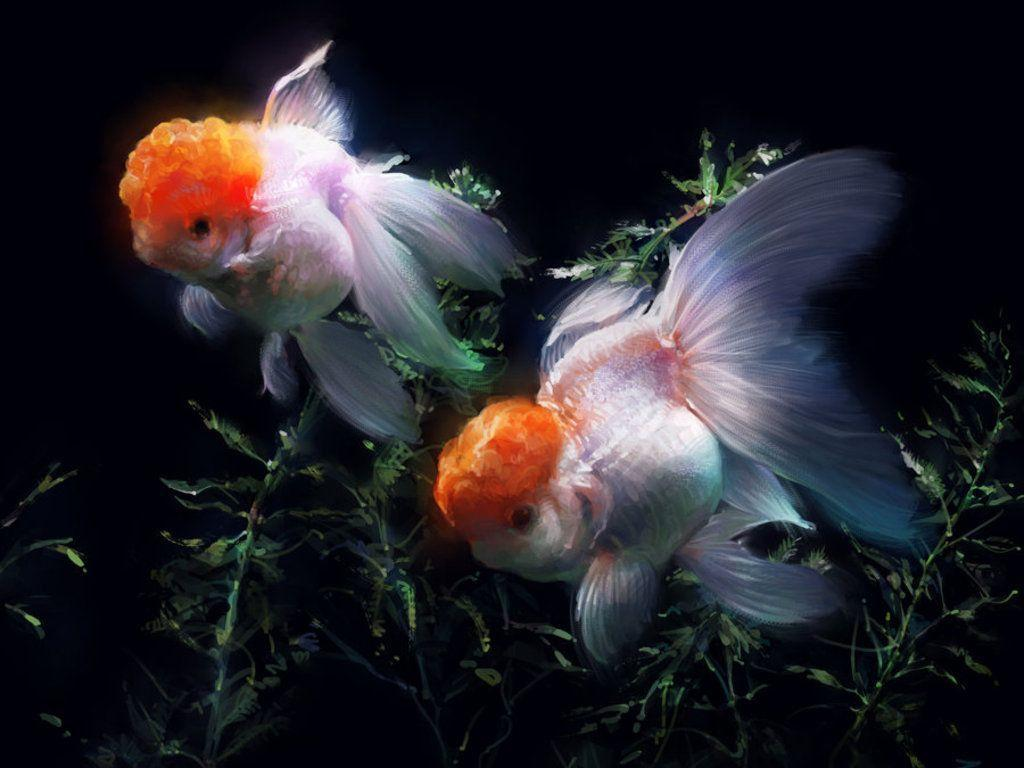 Gold Fish Wallpapers Wallpaper Cave HD Wallpapers Download Free Images Wallpaper [1000image.com]