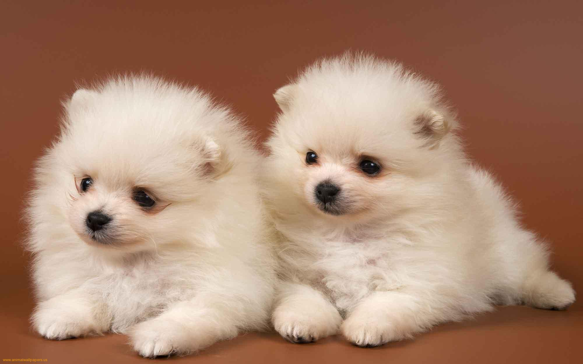Cute Puppy Pictures Wallpapers Wallpaper Cave HD Wallpapers Download Free Images Wallpaper [1000image.com]