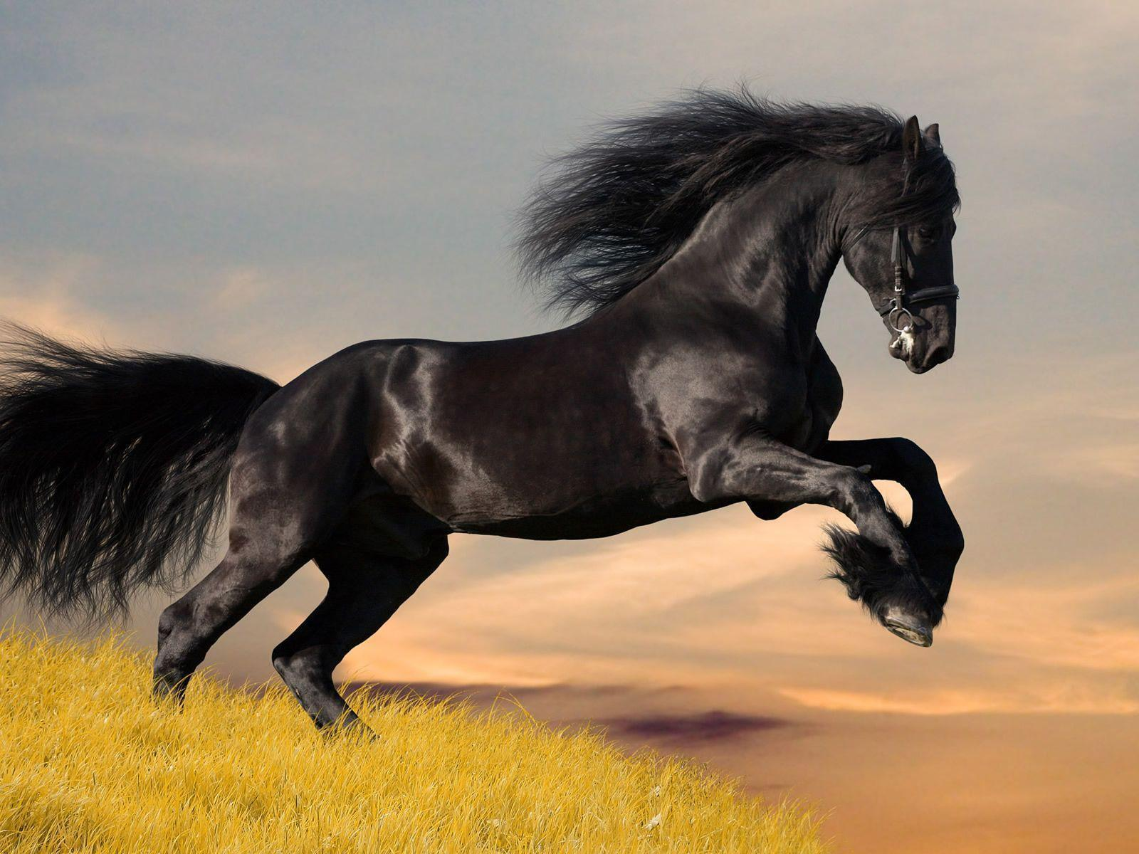 Black Horse Wallpapers Wallpaper Cave