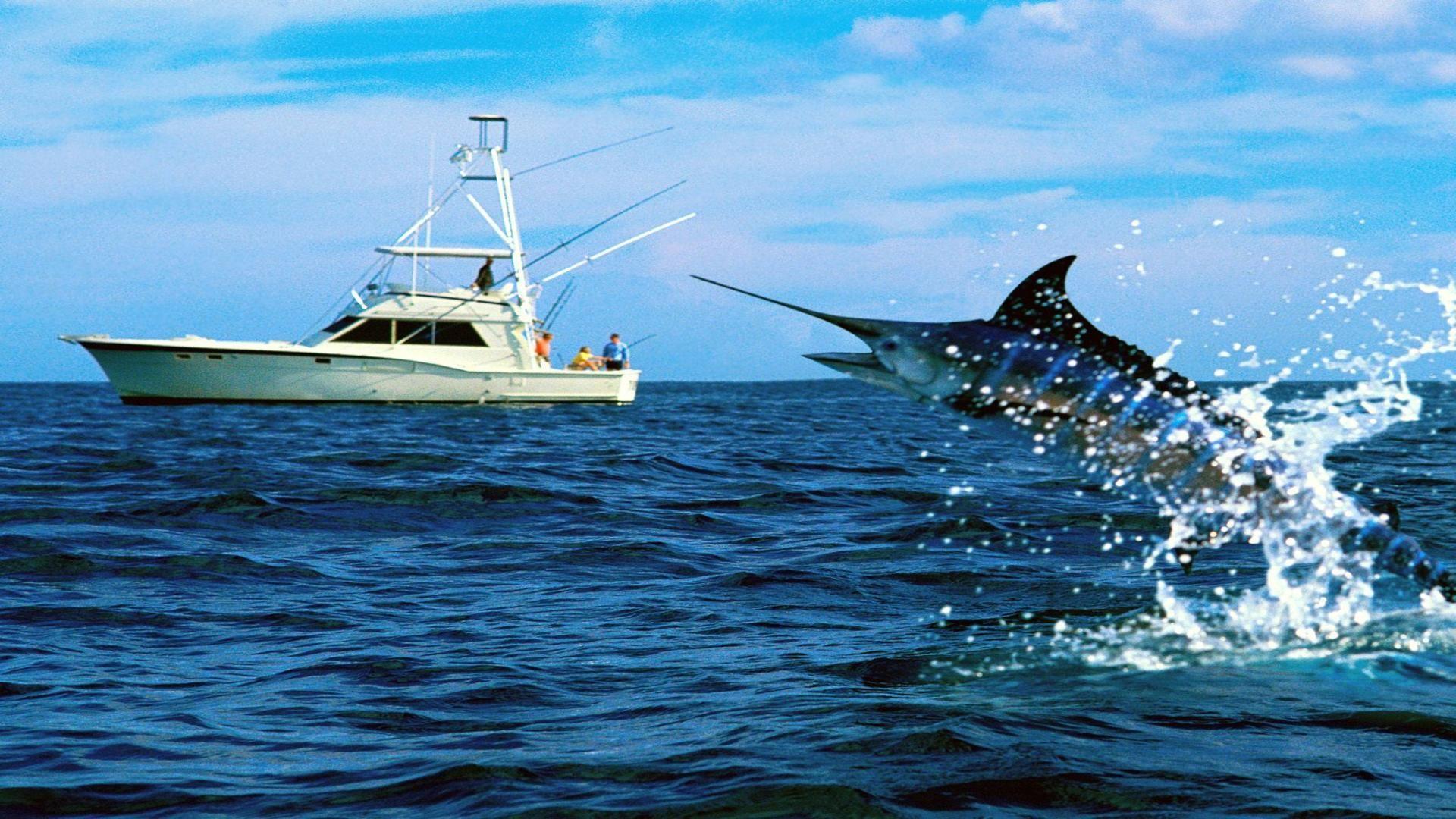 fish marlin desktop 1920x1200 - photo #22