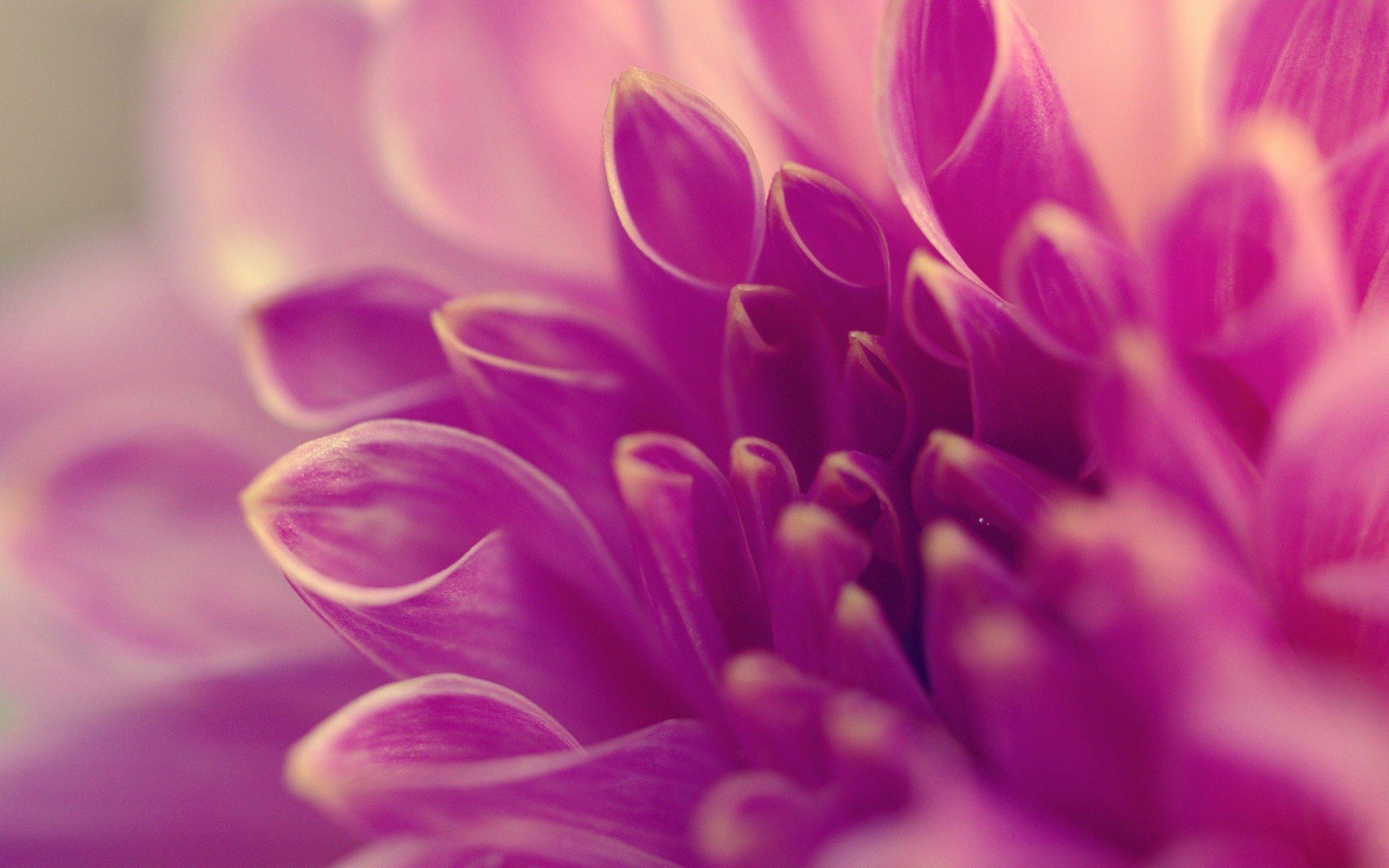 Pretty Purple Flower Backgrounds 22217