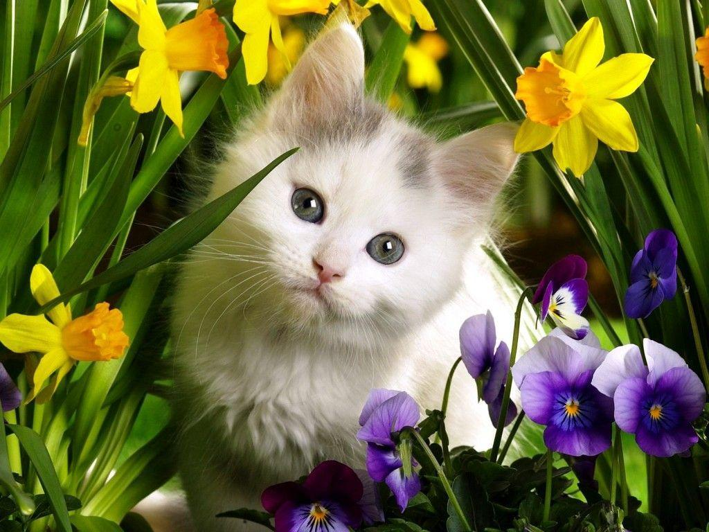 cute baby animals wallpapers wallpaper cave