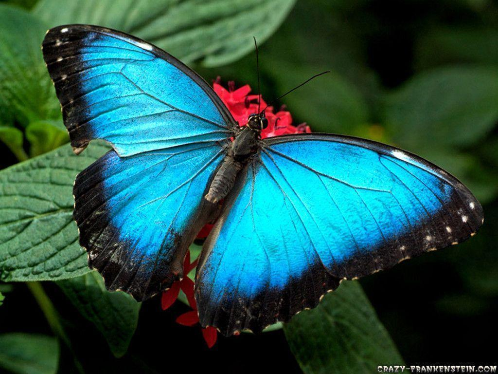 Beautiful Wallpapers Of Butterflies | coolstyle wallpapers.