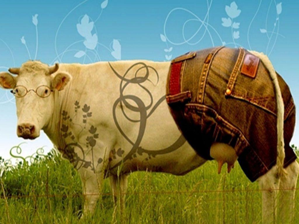 funny cow wallpaper - photo #5