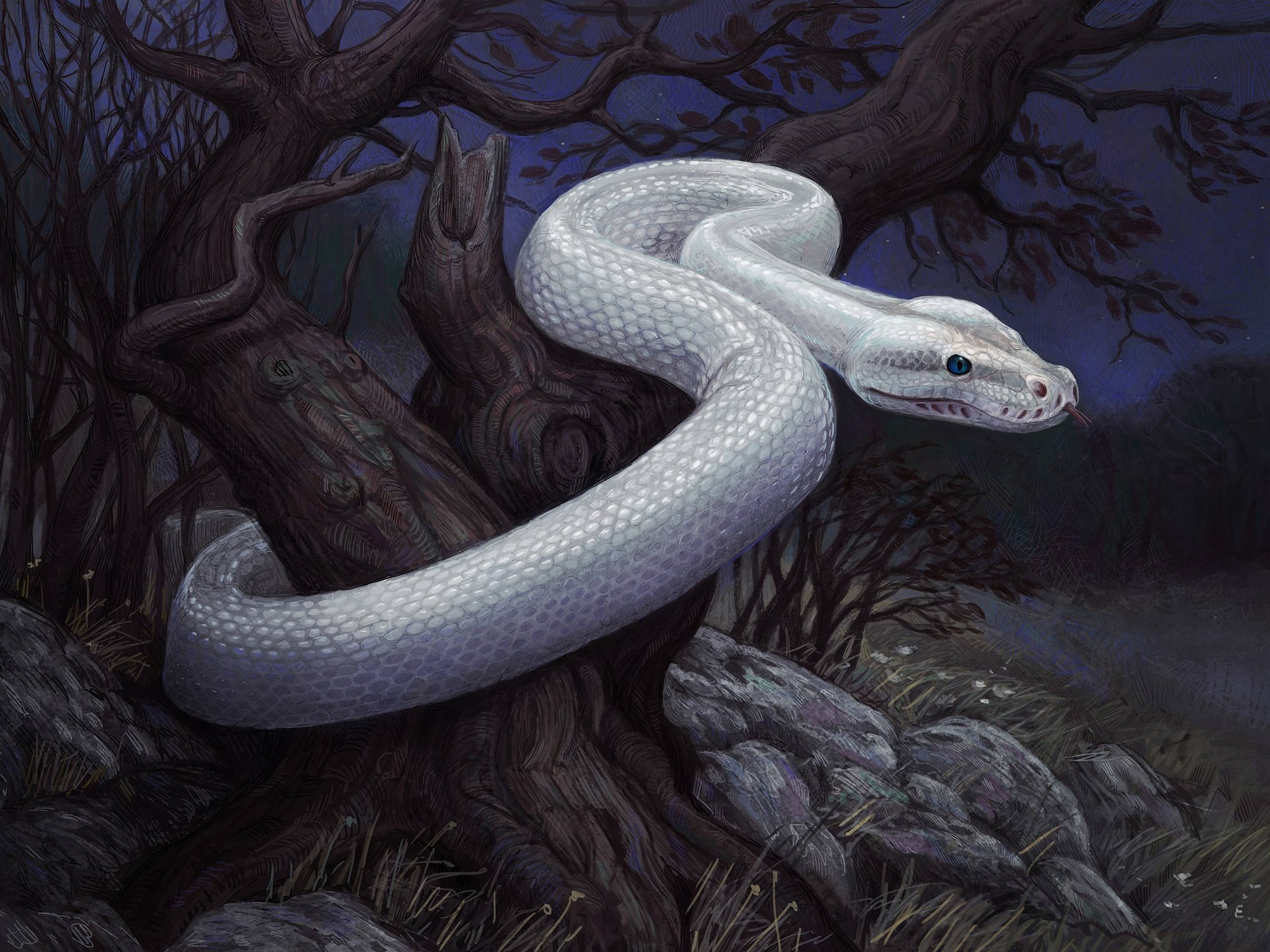 280 Snake Wallpapers | Snake Backgrounds Page 4