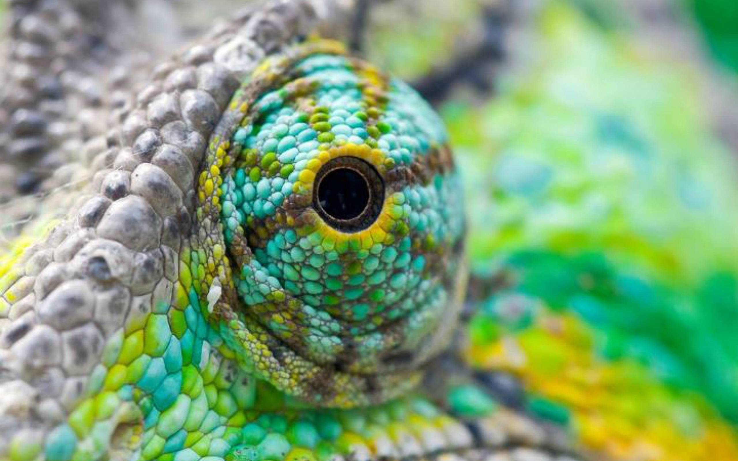 Colorful Lizard Eyes Wallpaper | Paravu.com | HD Wallpaper and ...