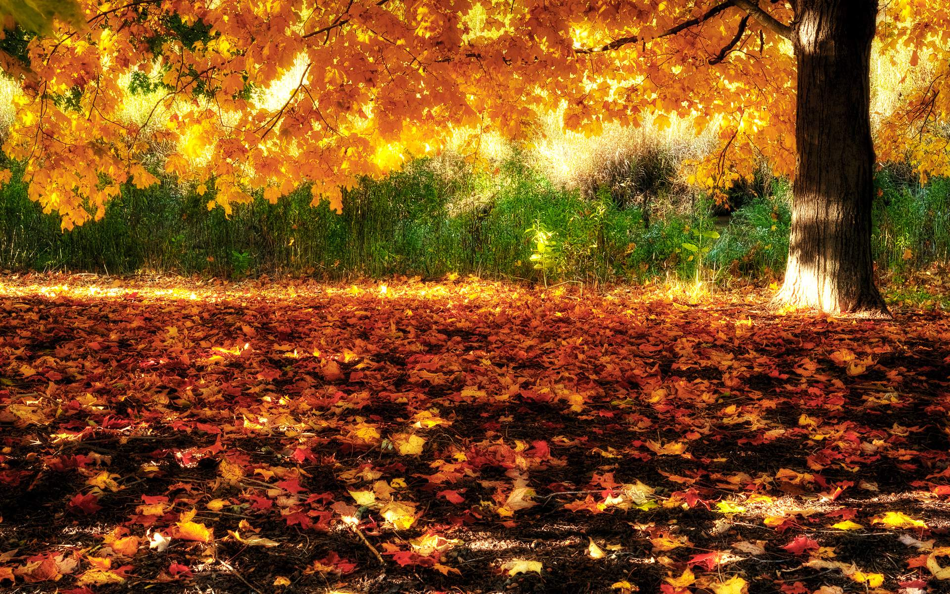 High Resolution Fall Wallpaper: Fall Autumn Wallpapers