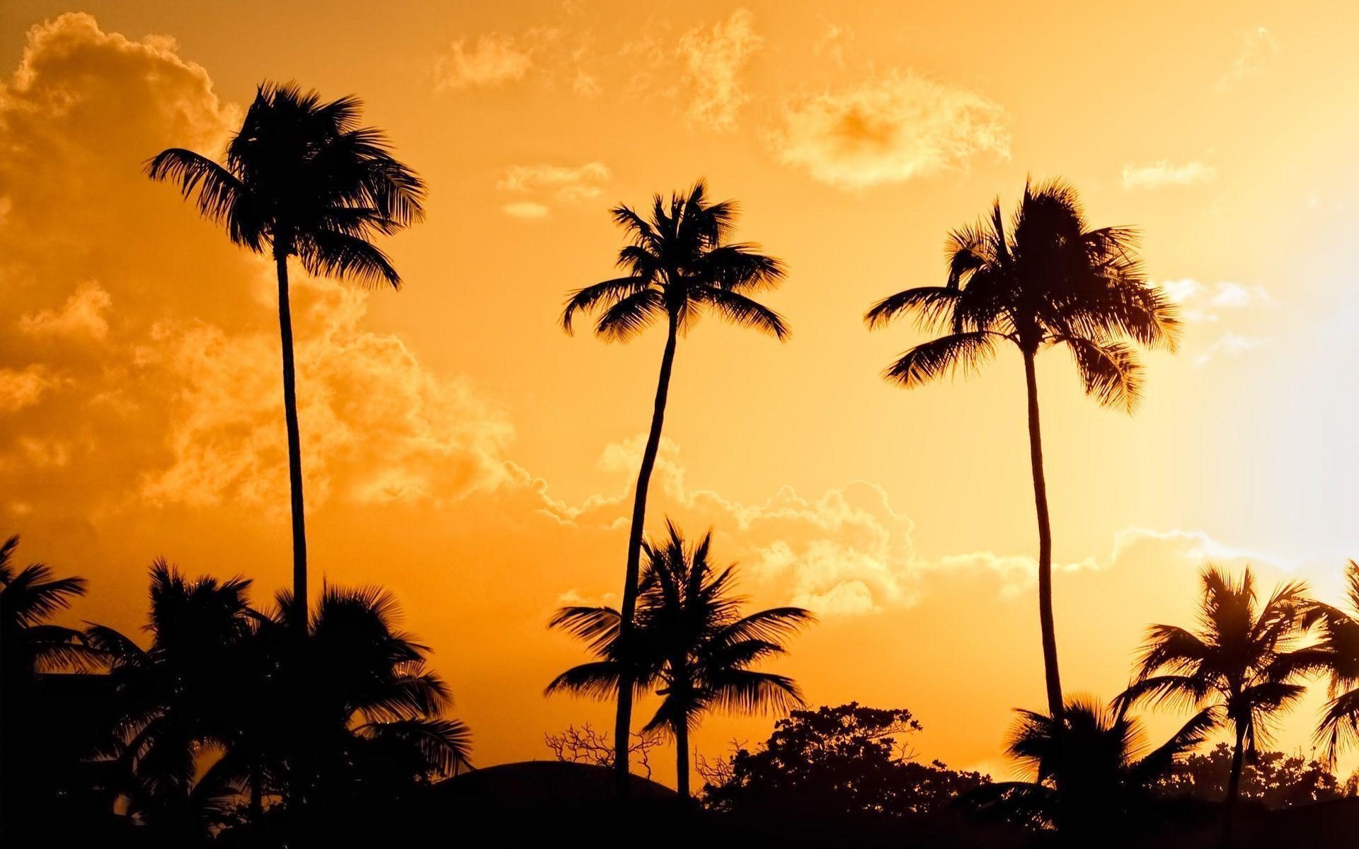 stussy wallpaper palm trees - photo #22
