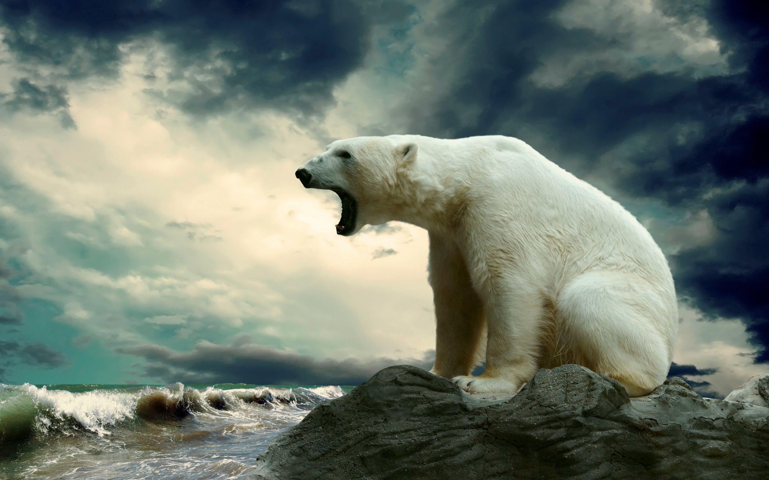 polar bear wallpapers wallpaper cave