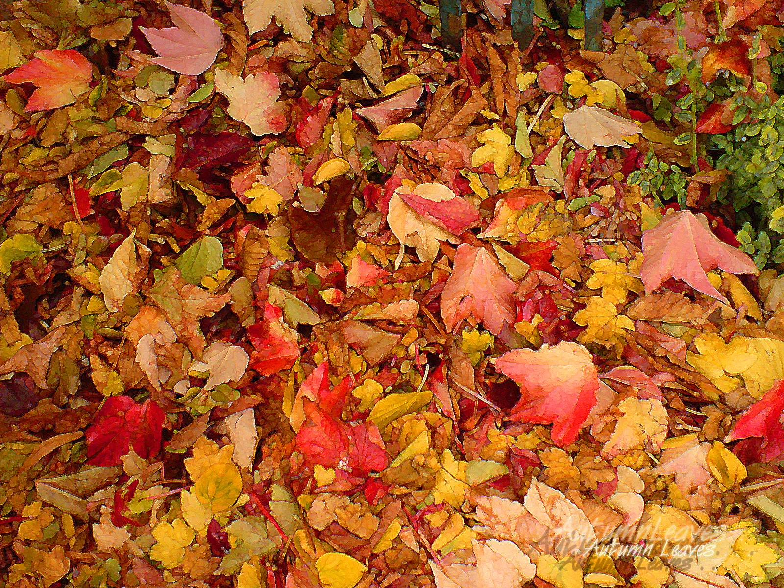 Autumn Leaves Wallpapers Wallpaper Cave