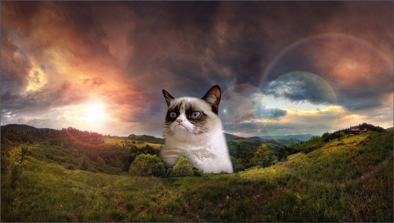 grumpy cat hd wallpapers -#main