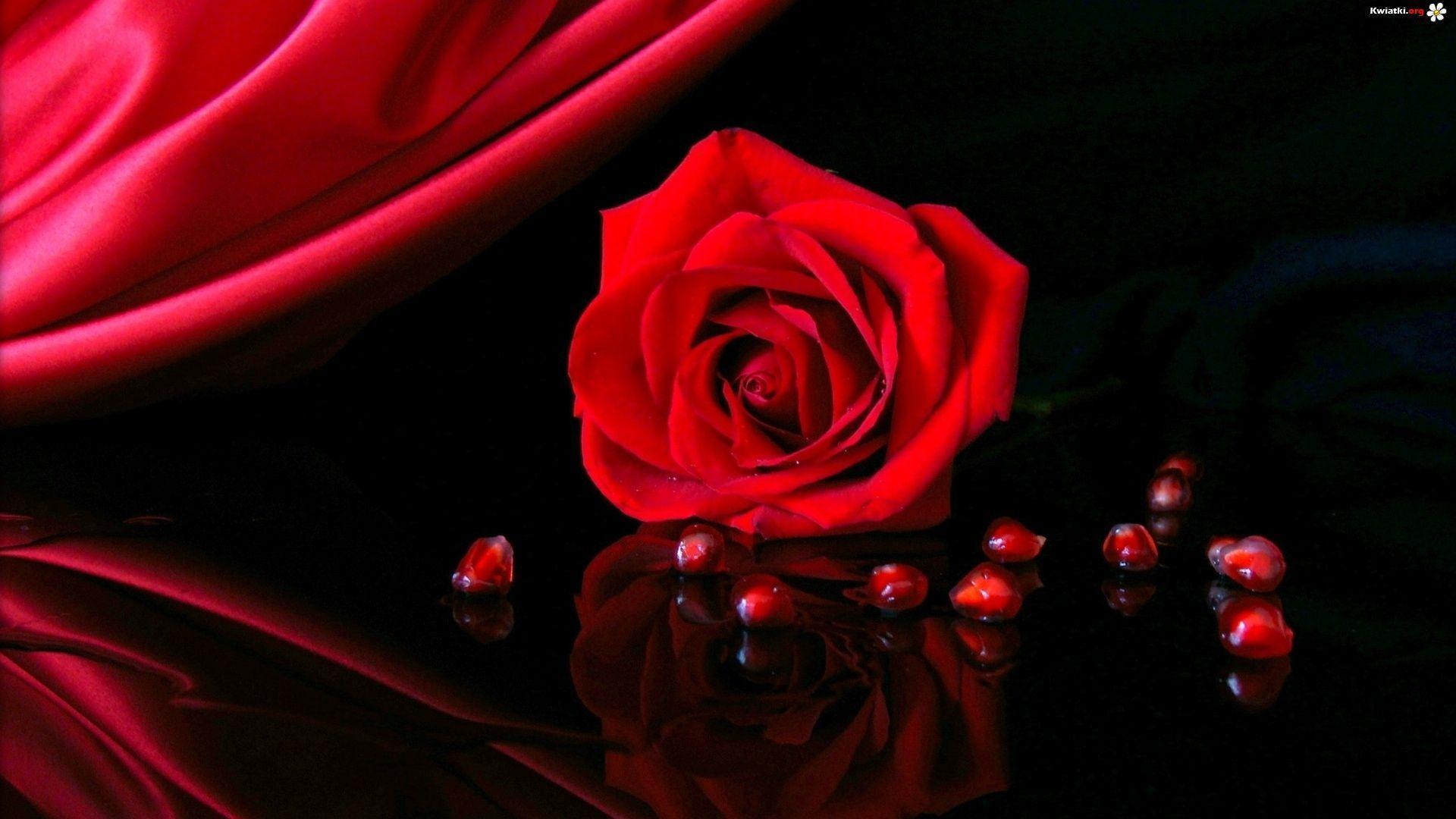 red rose desktop background - photo #7