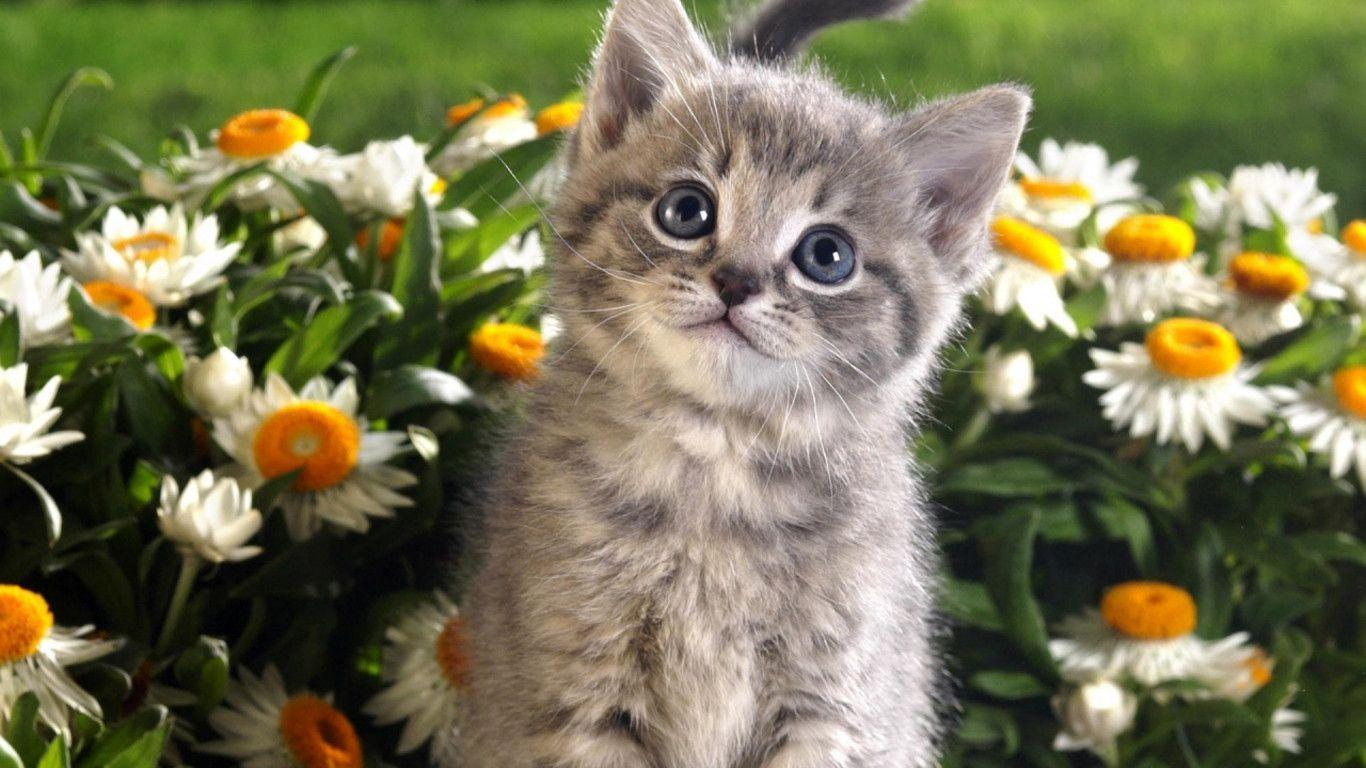 cats wallpapers free download 23 | free 3d wallpapers