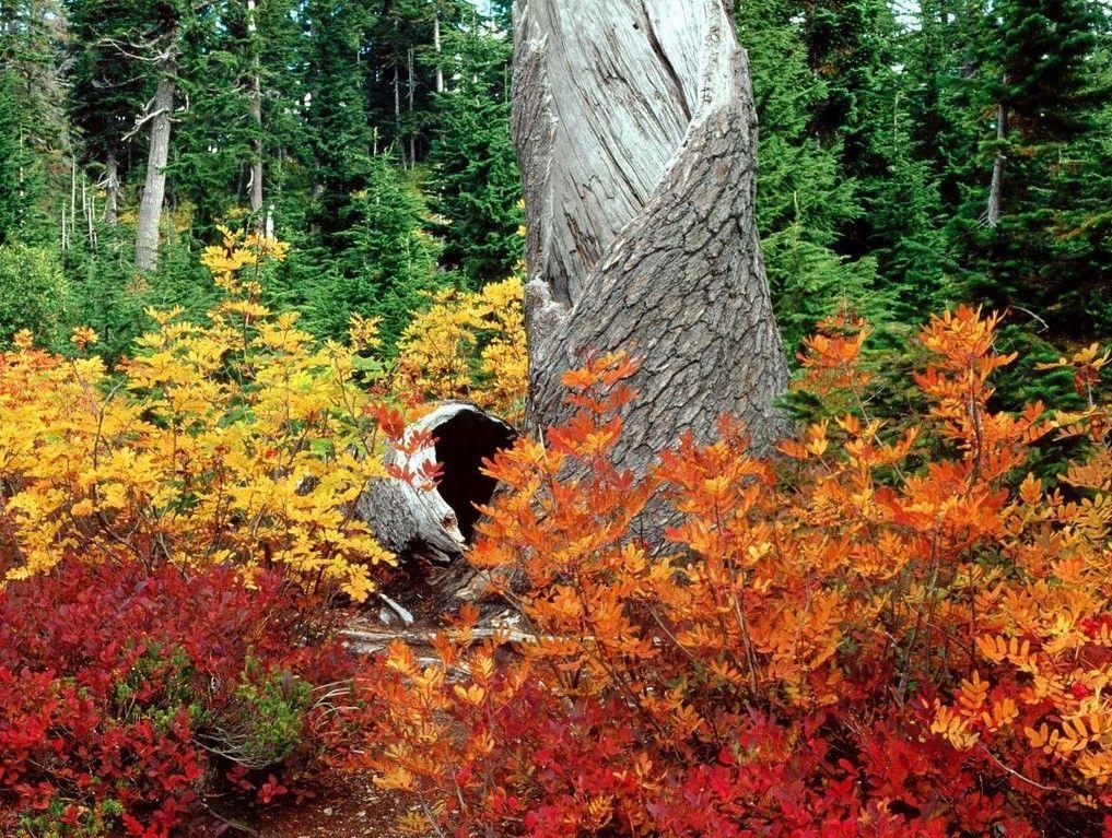 Free autumn wallpapers for desktop wallpaper cave for Paesaggi autunnali per desktop