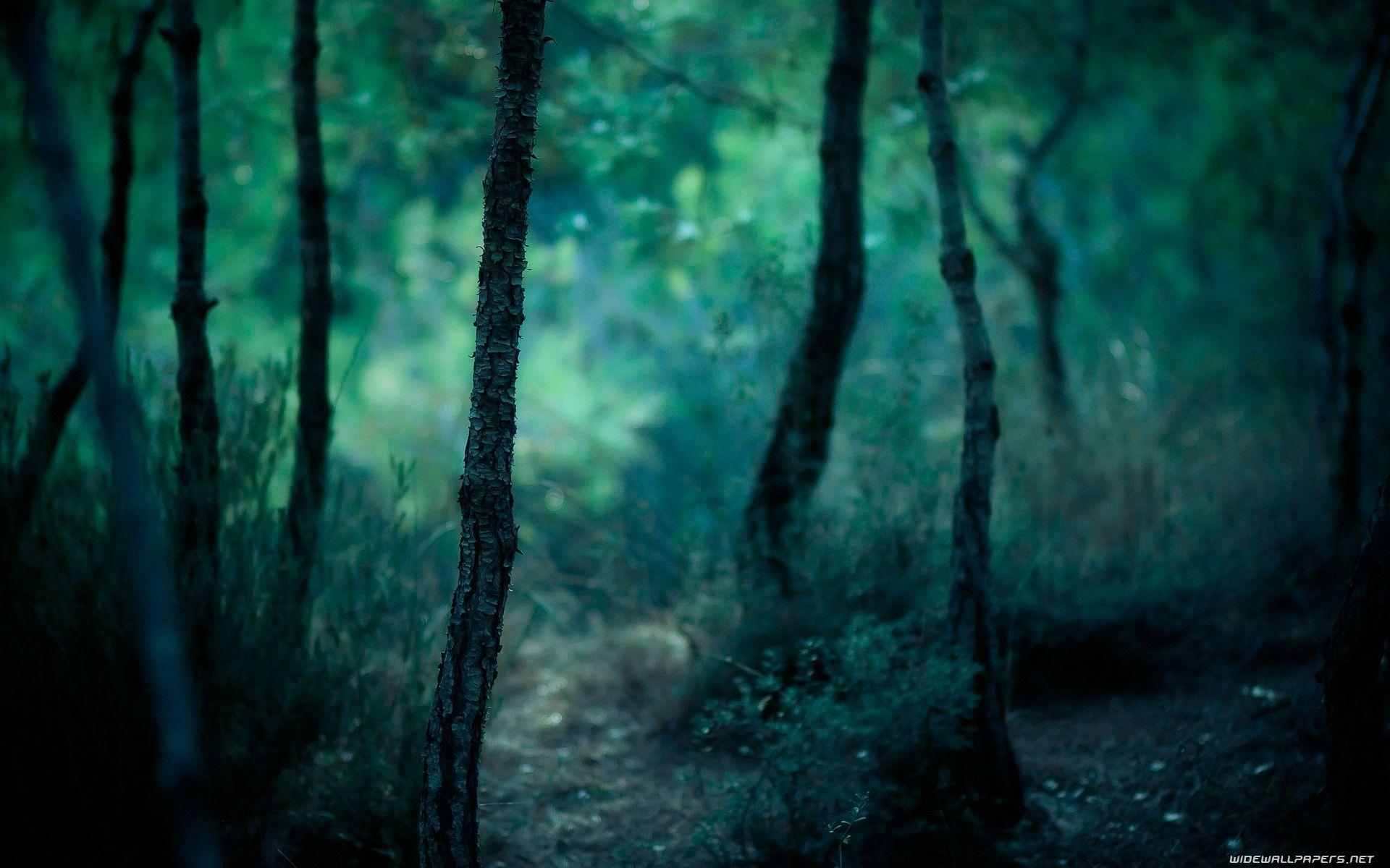 Forest Photography Wallpapers Hd Backgrounds 9 HD Wallpapers