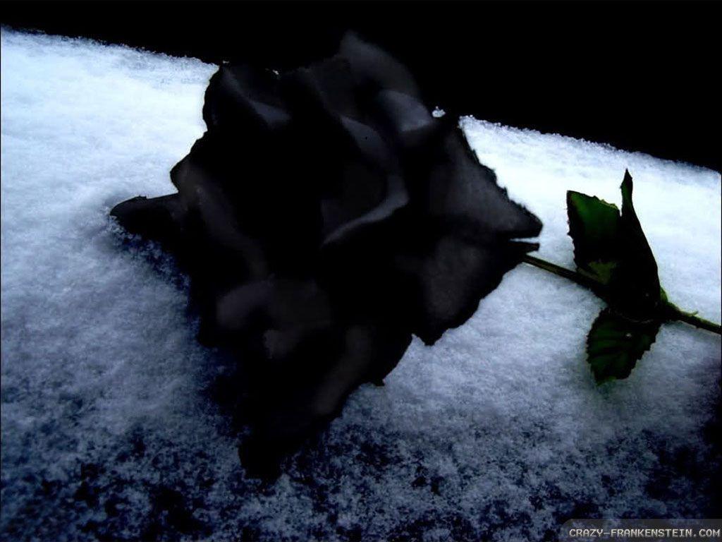 Wallpapers Of Black Rose