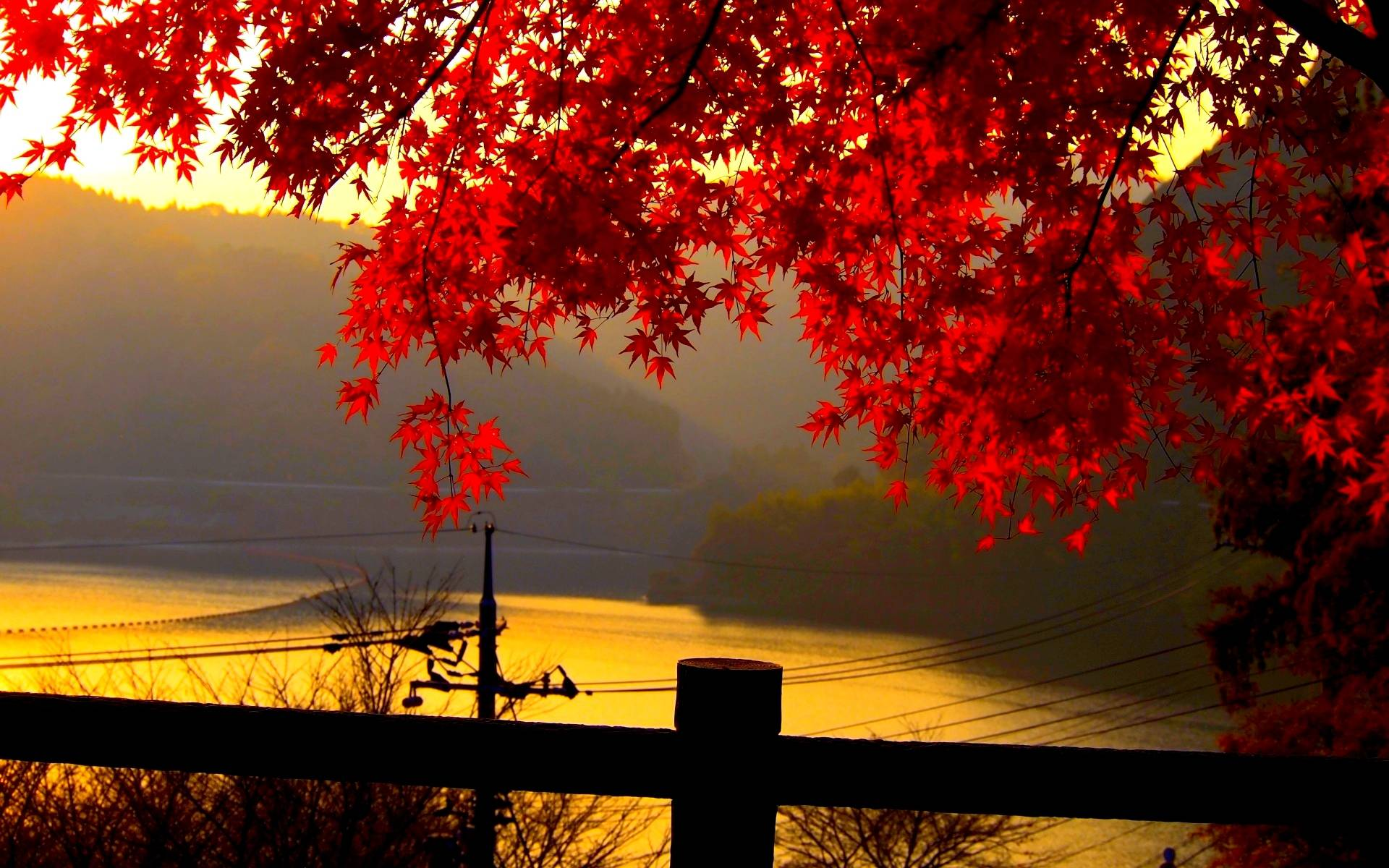 red fall wallpaper - photo #20
