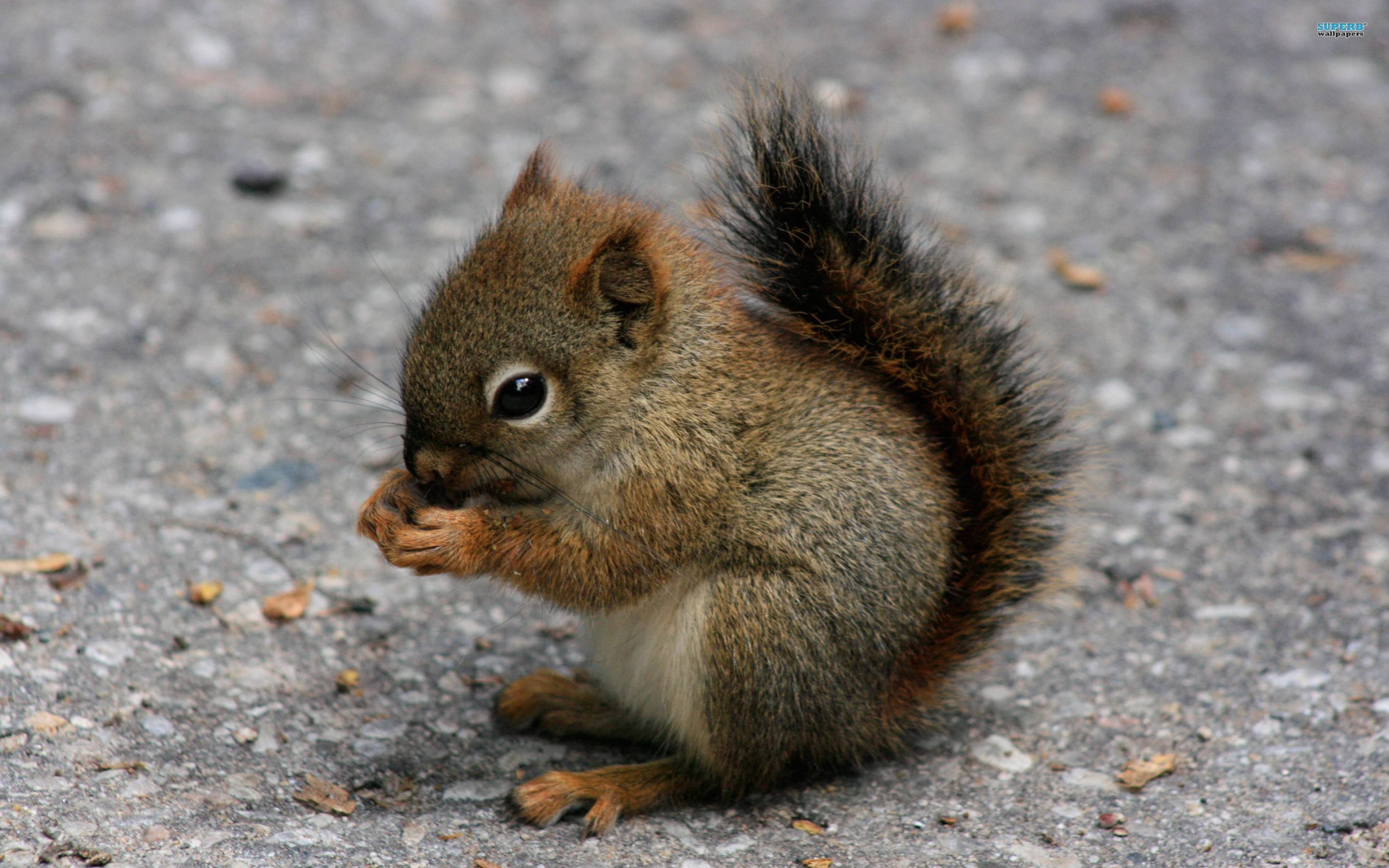 Squirrel Wallpaper 39780 in Animals - Telusers.
