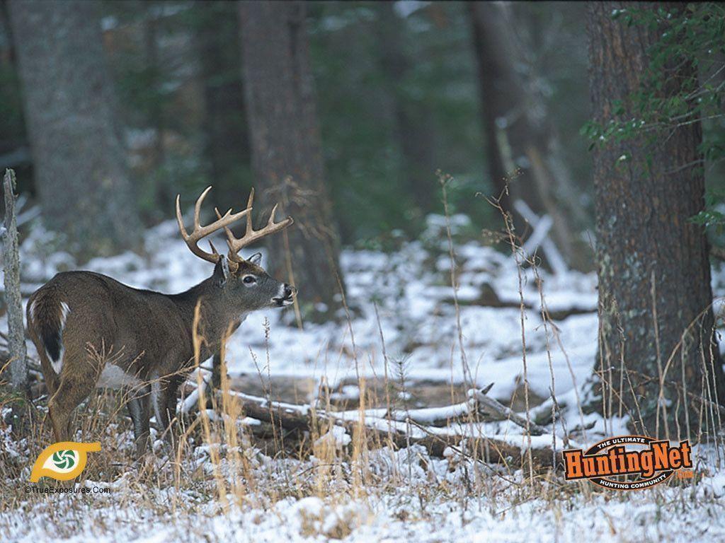 deer wallpaper for my desktop - photo #40