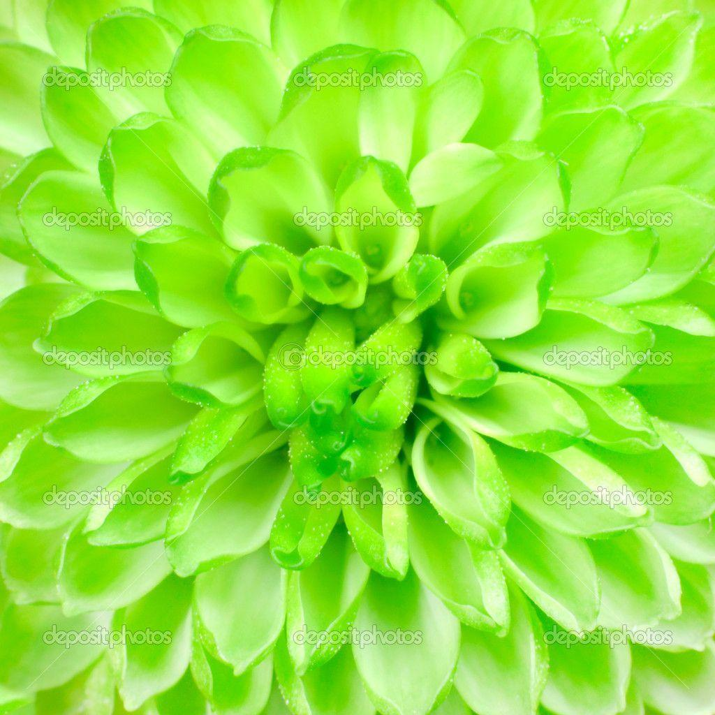 lime green backgrounds - photo #41