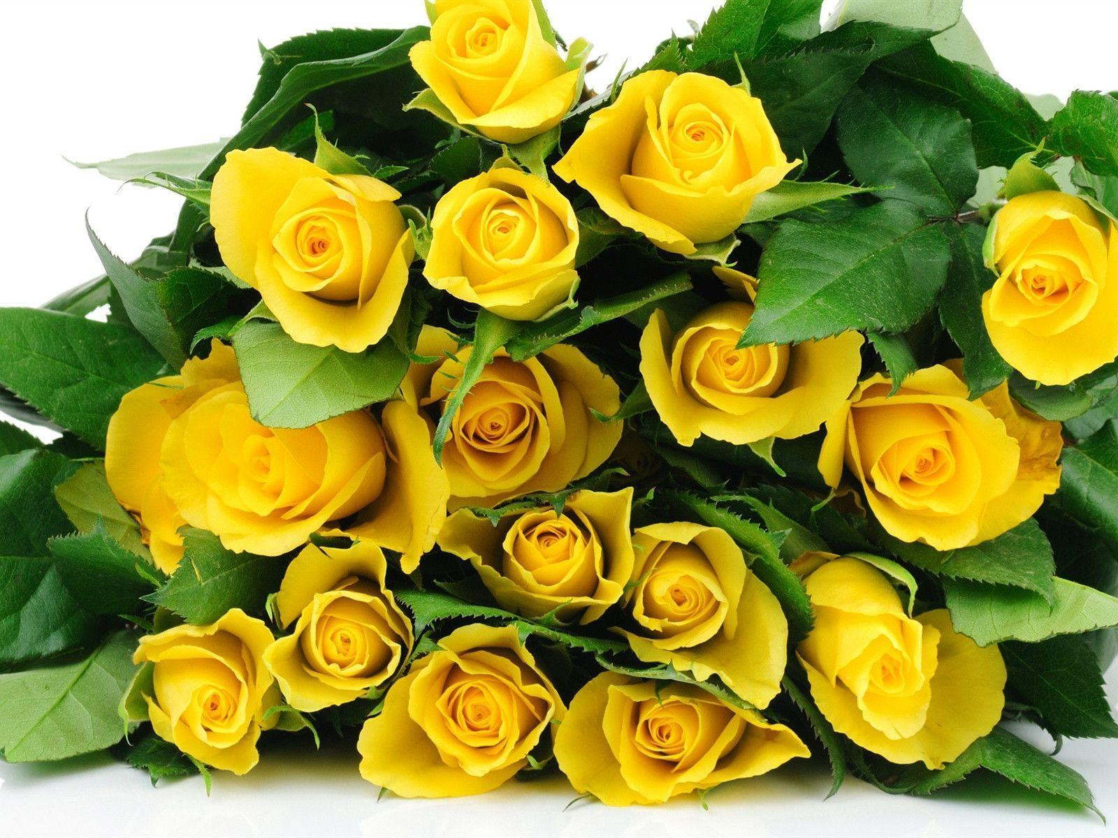 Yellow Rose Flower Wallpapers Wallpaper Cave