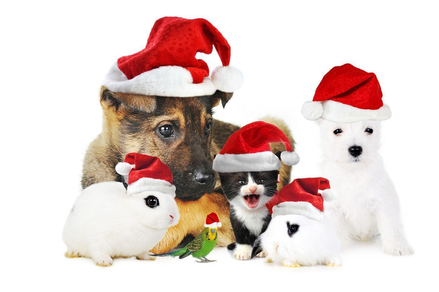 Christmas dog wallpapers wallpaper cave for Wildlife christmas cards 2016