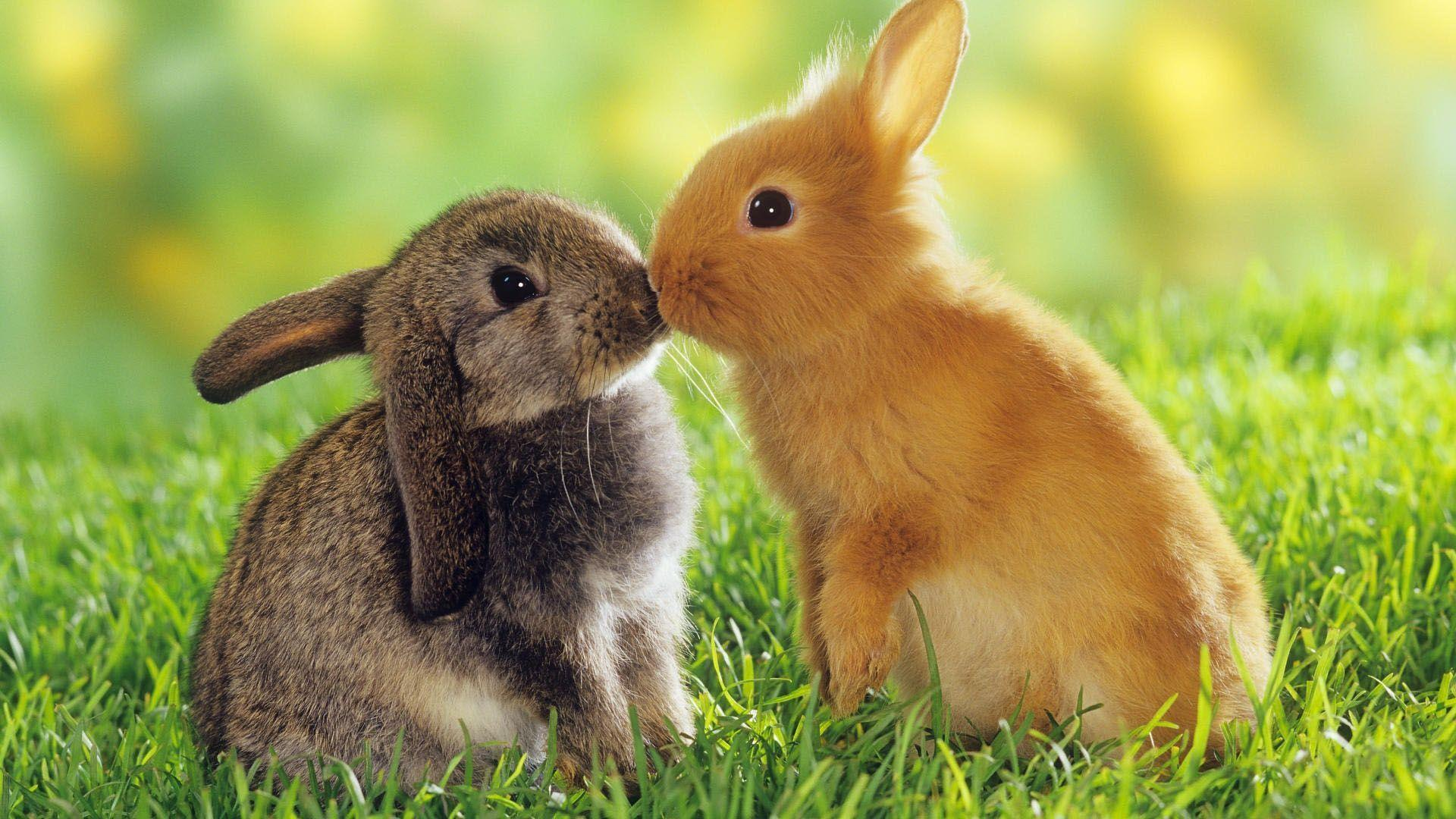 Wallpapers For Easter Bunny Wallpaper Backgrounds