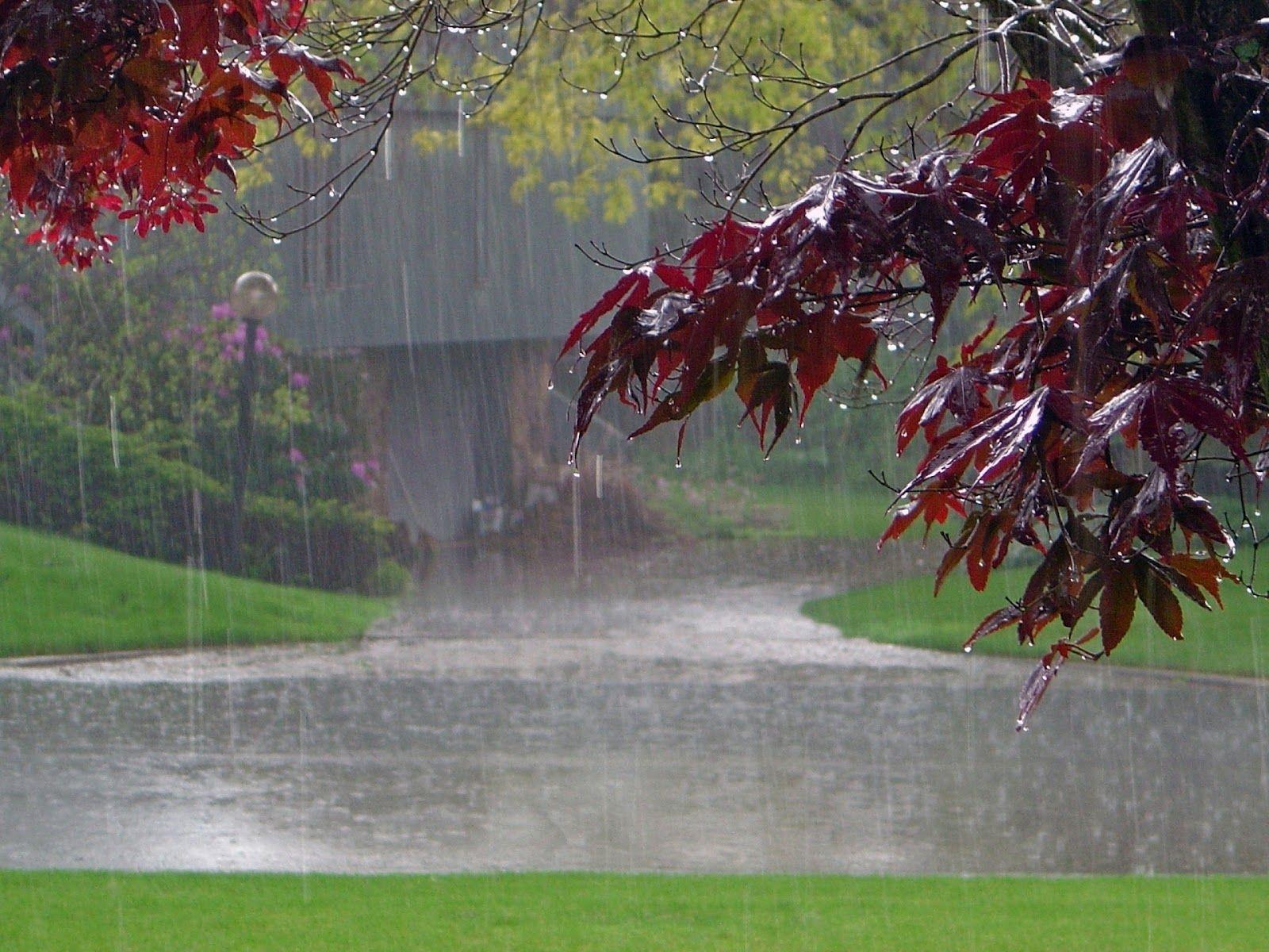 Rain Nature Wallpaper - HD Wallpapers, HQ Photos & Desktop ...