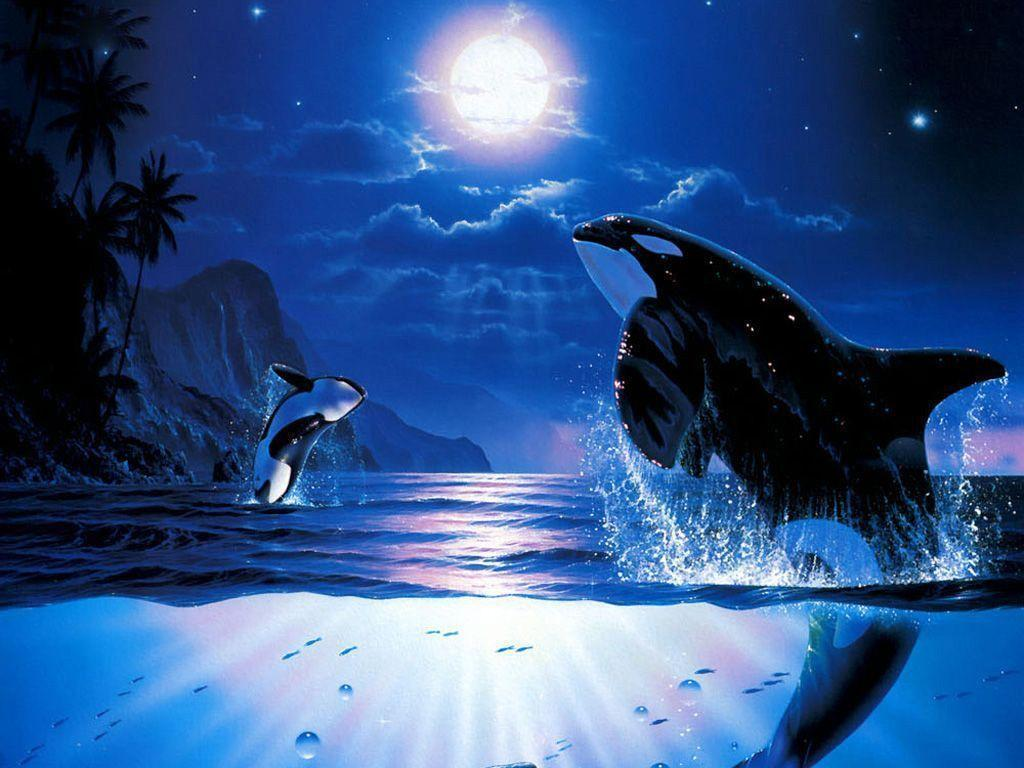 killer whales wallpapers wallpaper cave