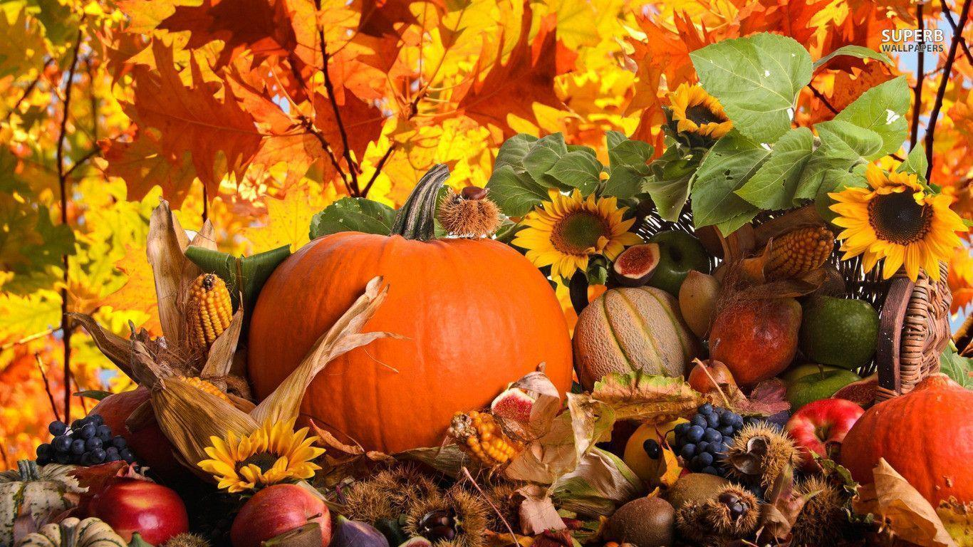 Autumn harvest wallpapers