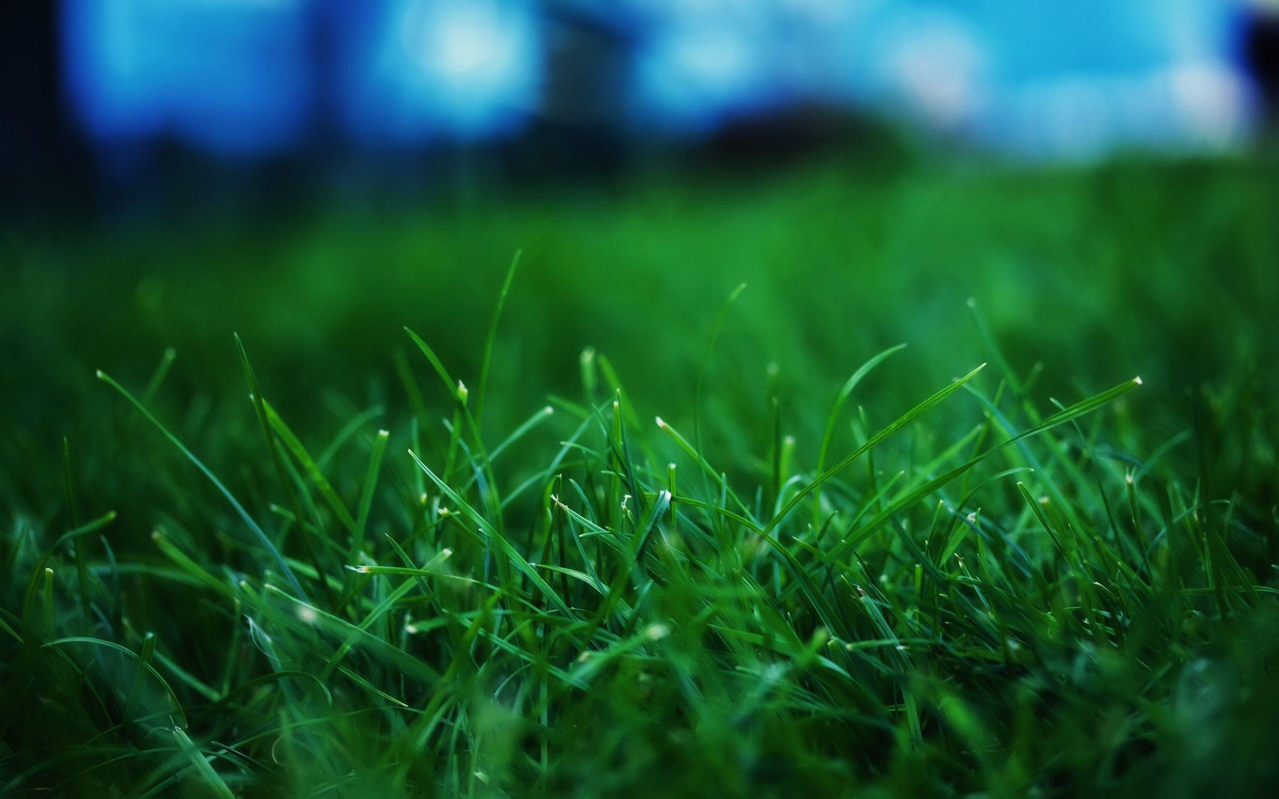 green grass wallpapers wallpaper cave