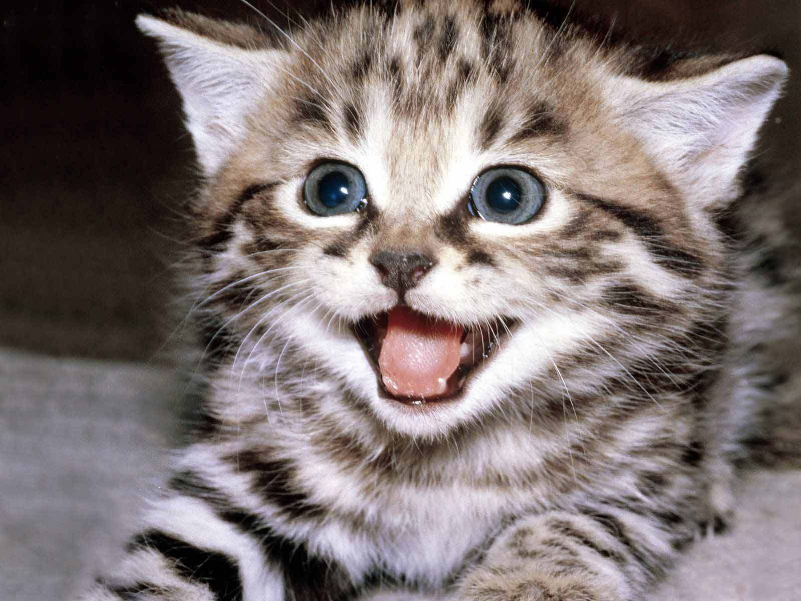 Cute Wallpapers - Cute Kittens Wallpaper (10501757) - Fanpop