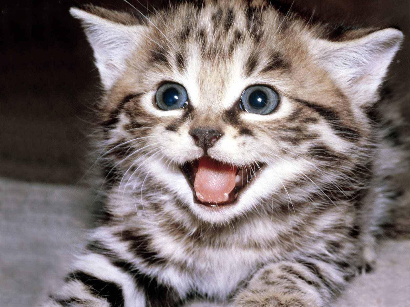 Cute Wallpapers - Cute Kittens Wallpaper (10501757) - Fanpop