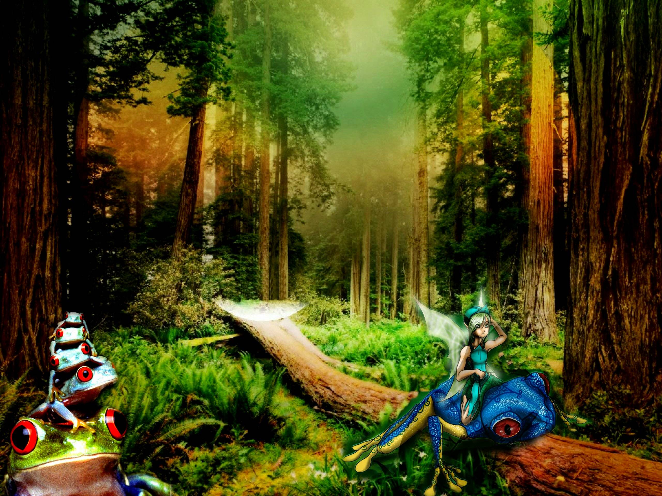 enchanted forest background - photo #25