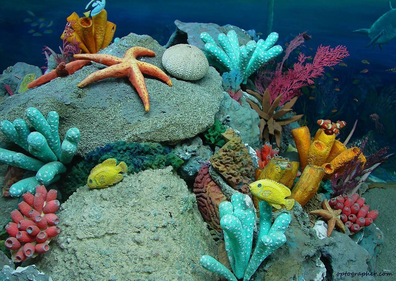 Marine Life Wallpapers Wallpaper Cave