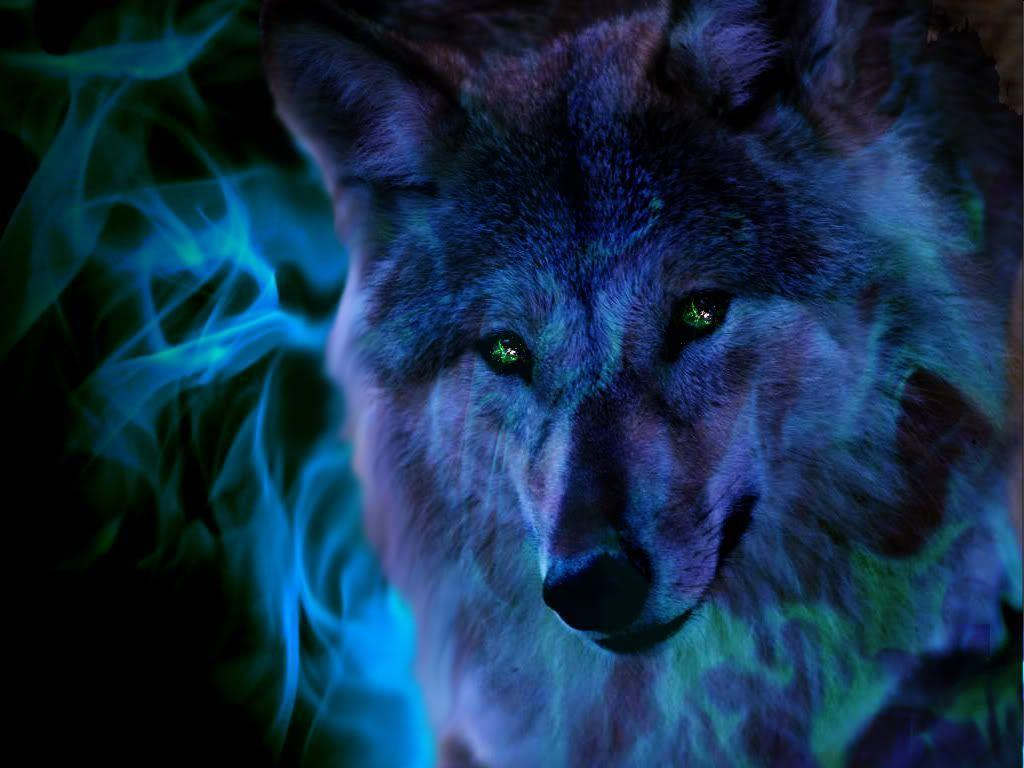 Ice Wolf Wallpapers - Wallpaper Cave