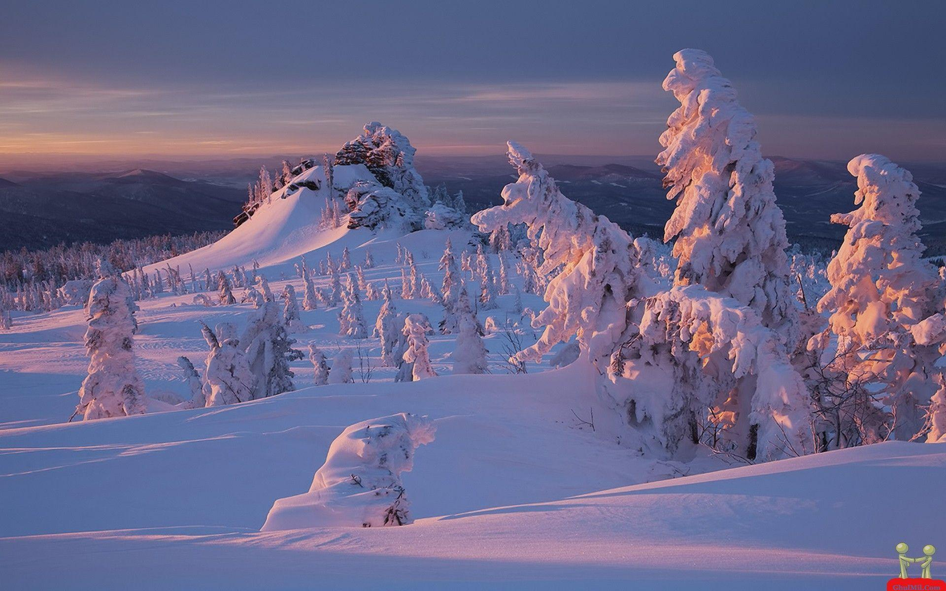 Beautiful Natural Snow Trees Mountains Wallpapers