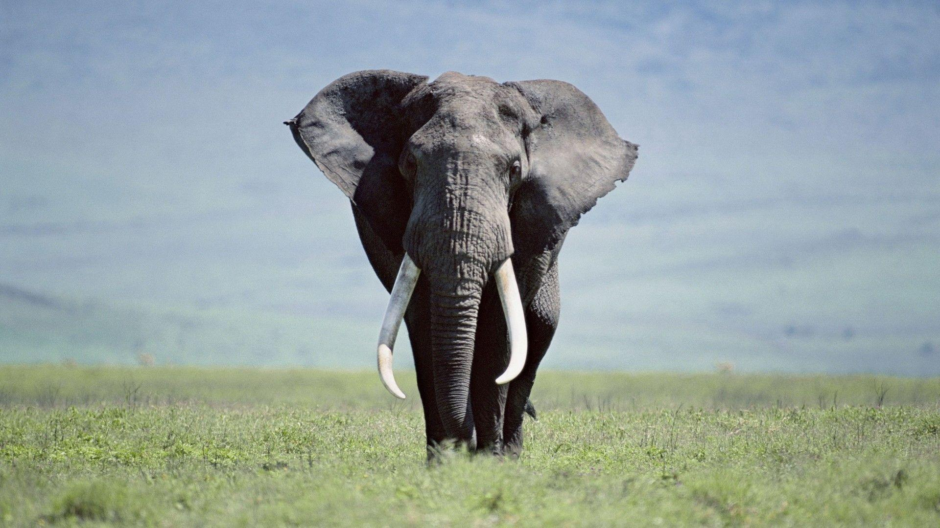 Elephant Wallpapers Wallpaper Cave