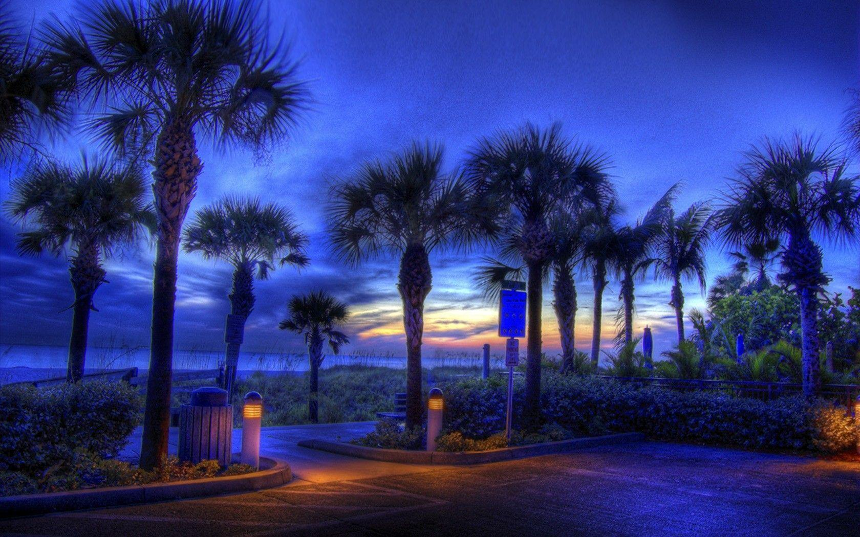 Palm Tree Beach Wallpapers - Wallpaper Cave