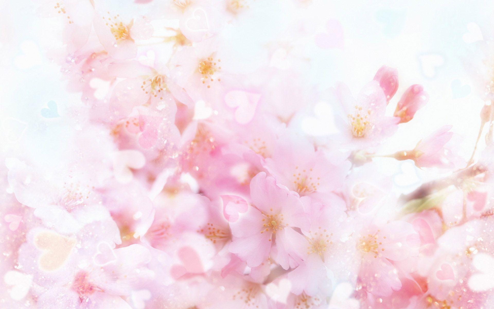 Pink Flower Wallpaper Backgrounds