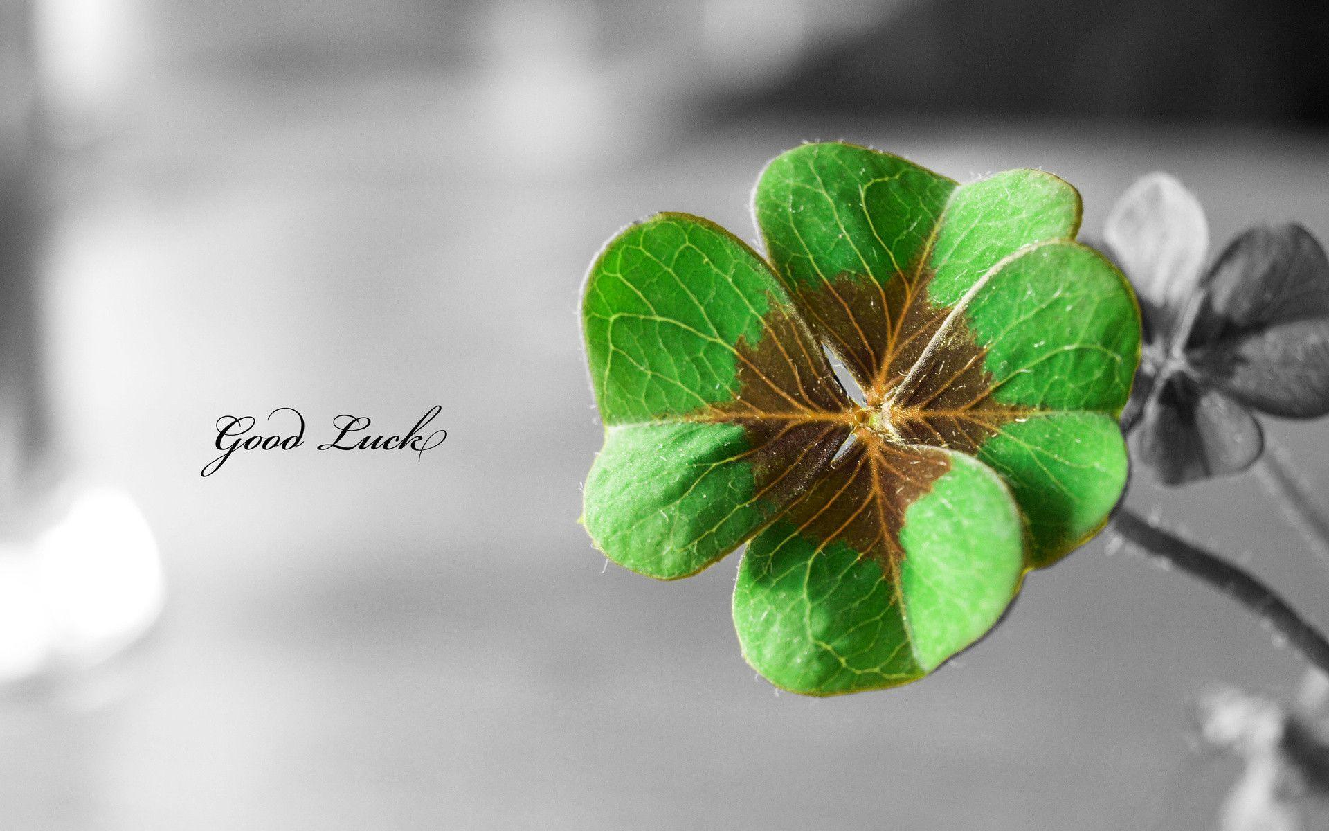 12 Lucky St. Patty's Day Backgrounds