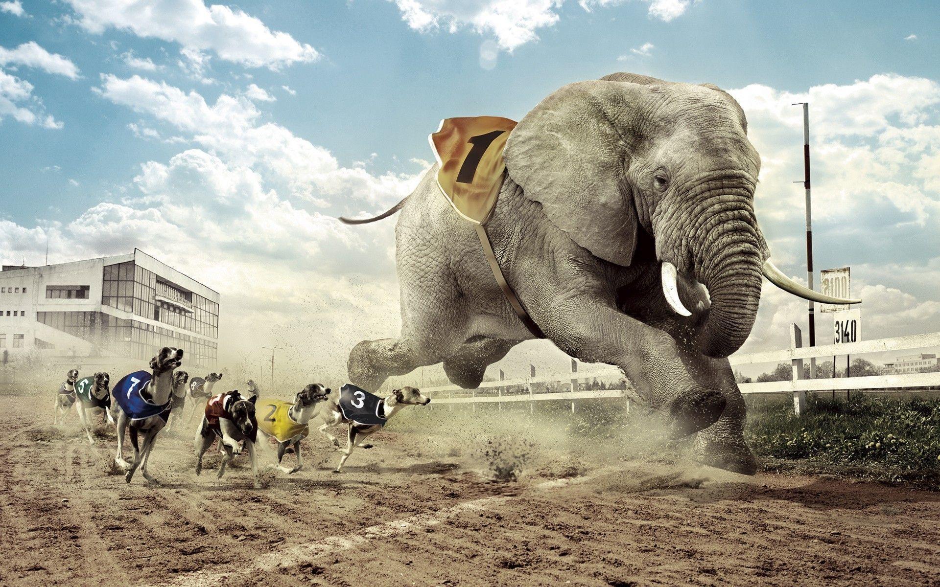 Dogs racing an elephant Wallpaper #
