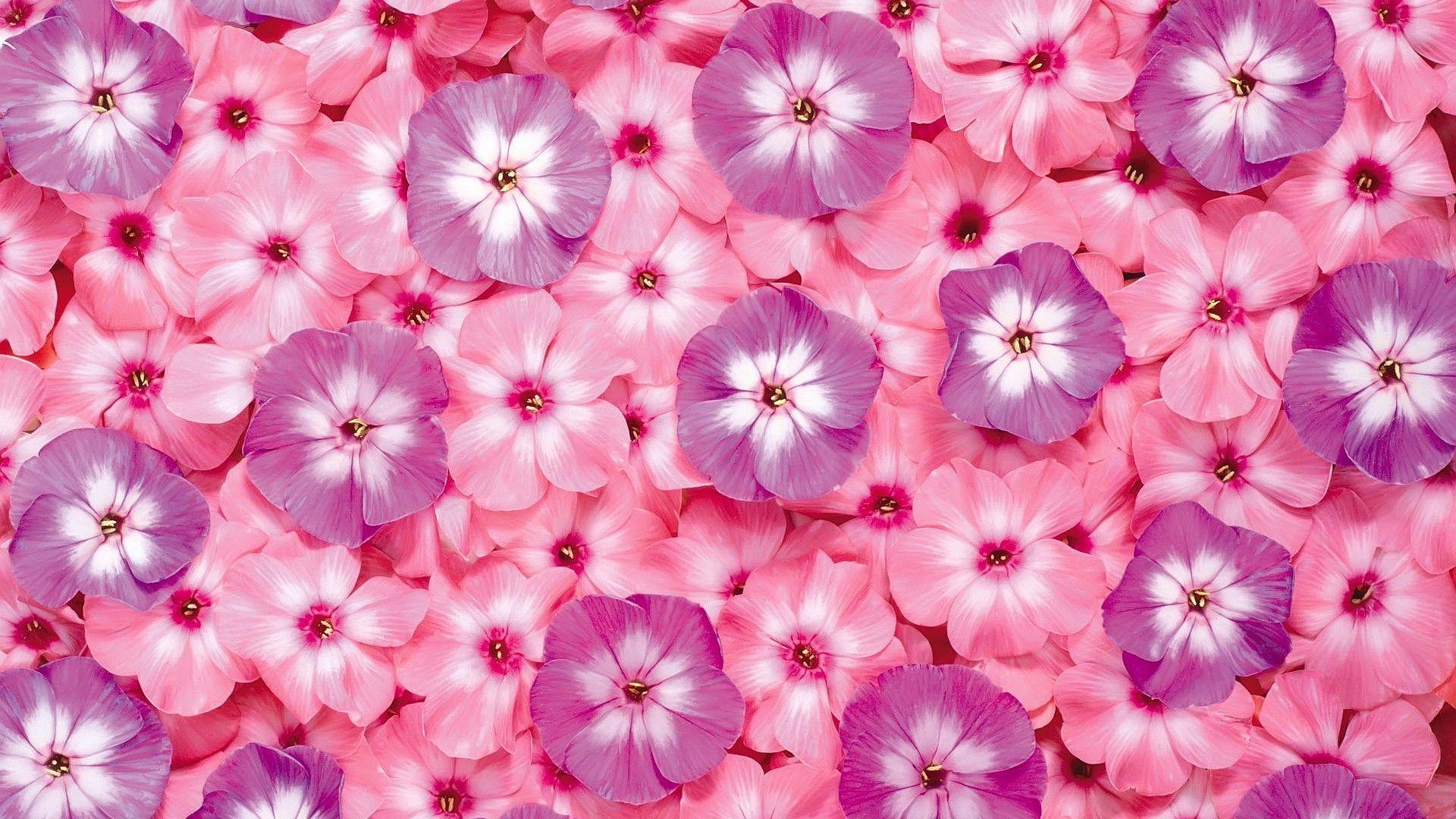 spring flower wallpaper pink - photo #43