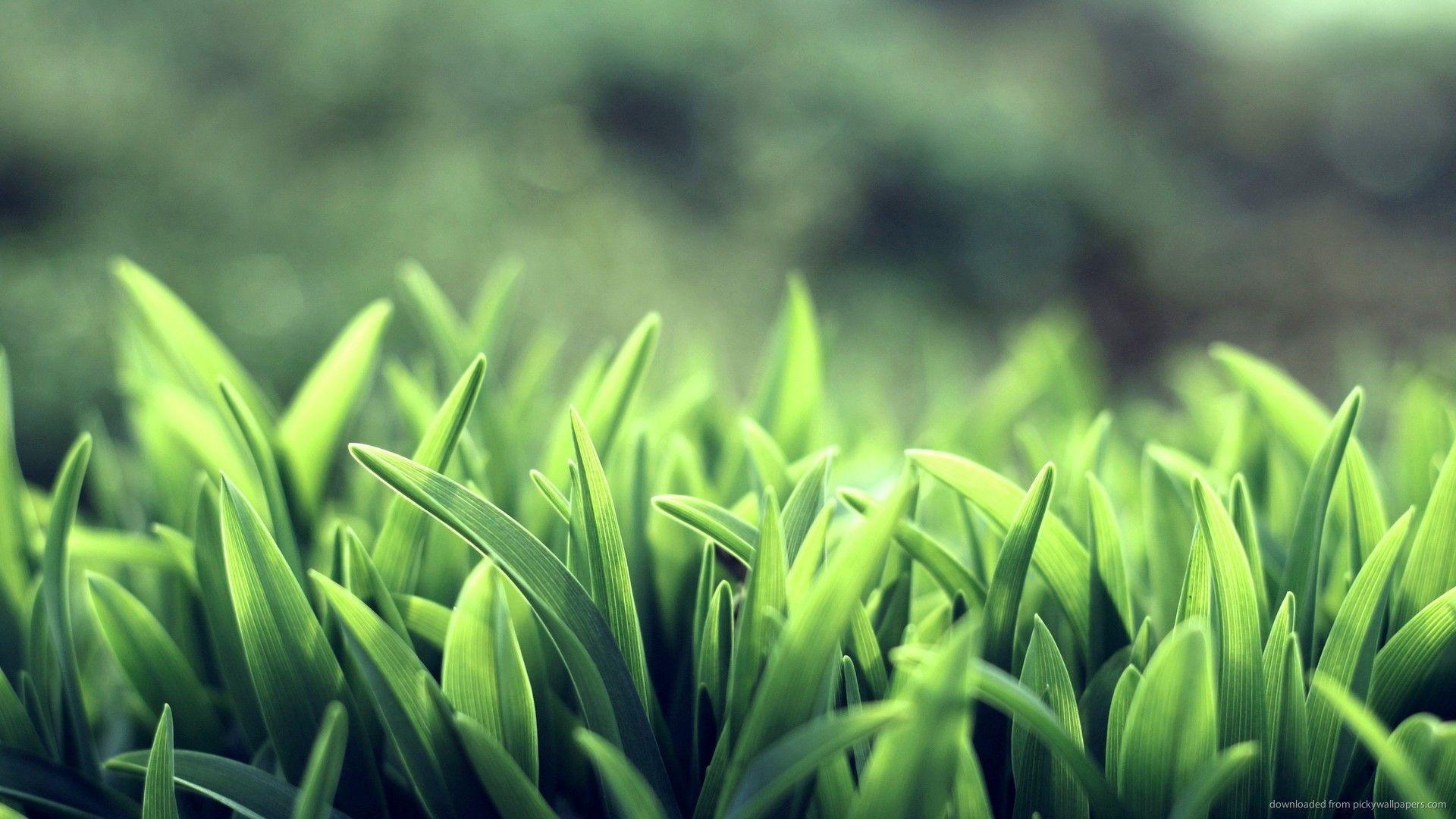 Green Grass Wallpapers Wallpaper Cave
