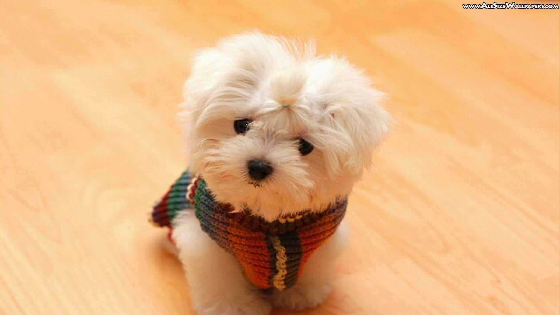 So cute puppies wallpaper 15897245 fanpop - Cute Puppy Wallpapers Wallpaper 1920x1080px Wallpaper Cute Puppy