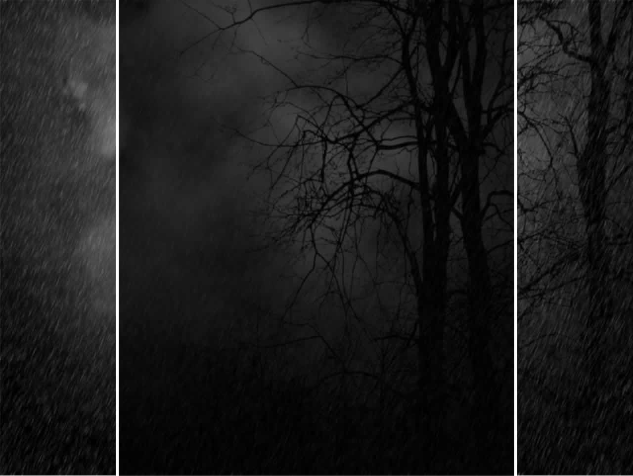 Wallpapers For > Dark Forest Background Images